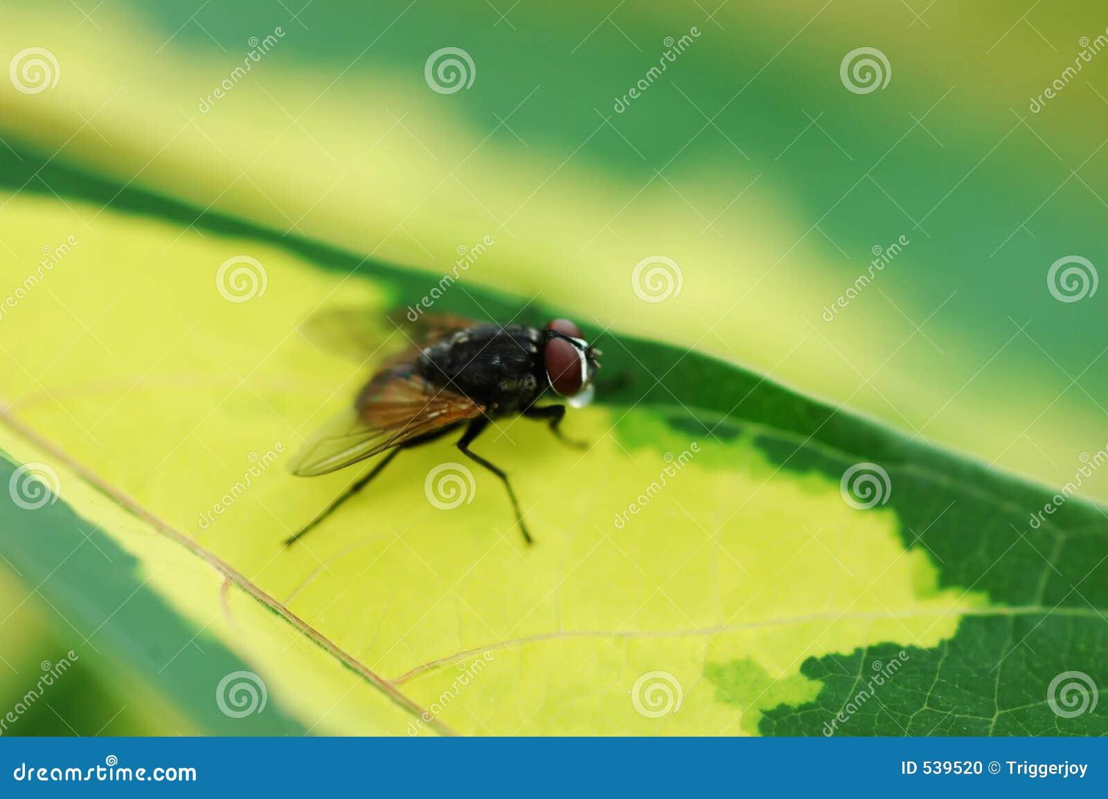 Download 飞行房子 库存照片. 图片 包括有 叶子, 宏指令, 绿色, 滤网, 昆虫, 飞行, 关闭, 房子, 本质, 栖息 - 539520