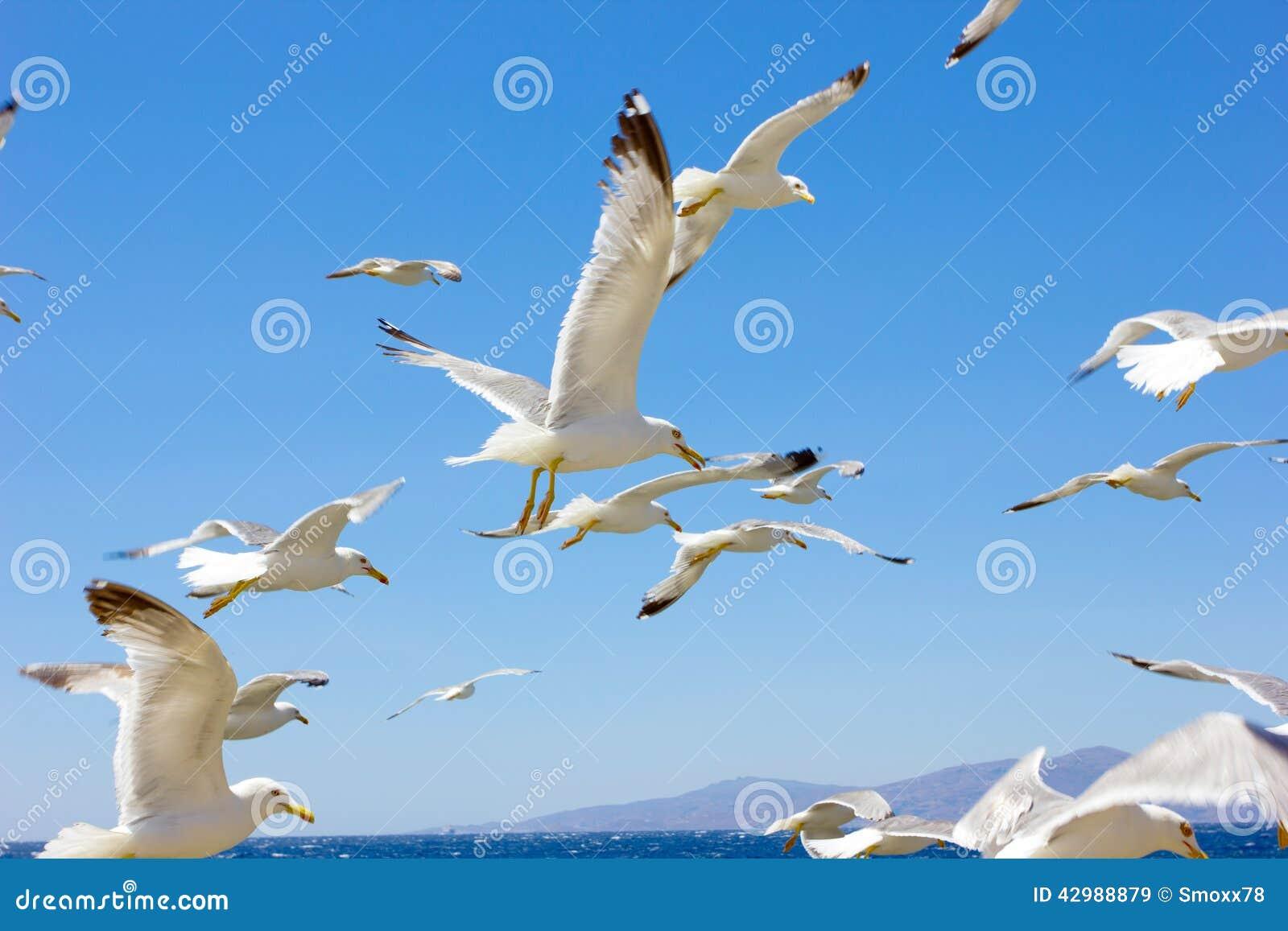 飞行海鸥群