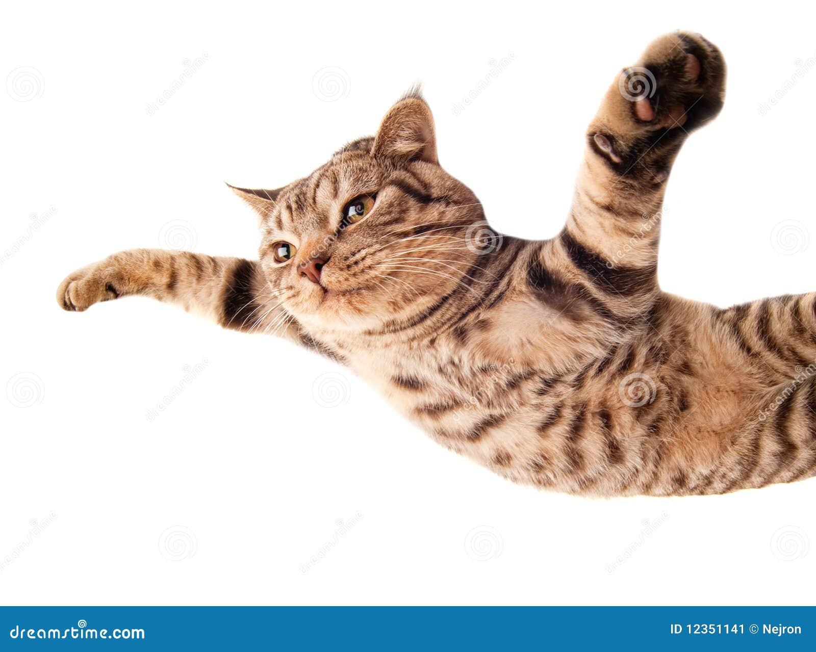 飞行的滑稽的小猫