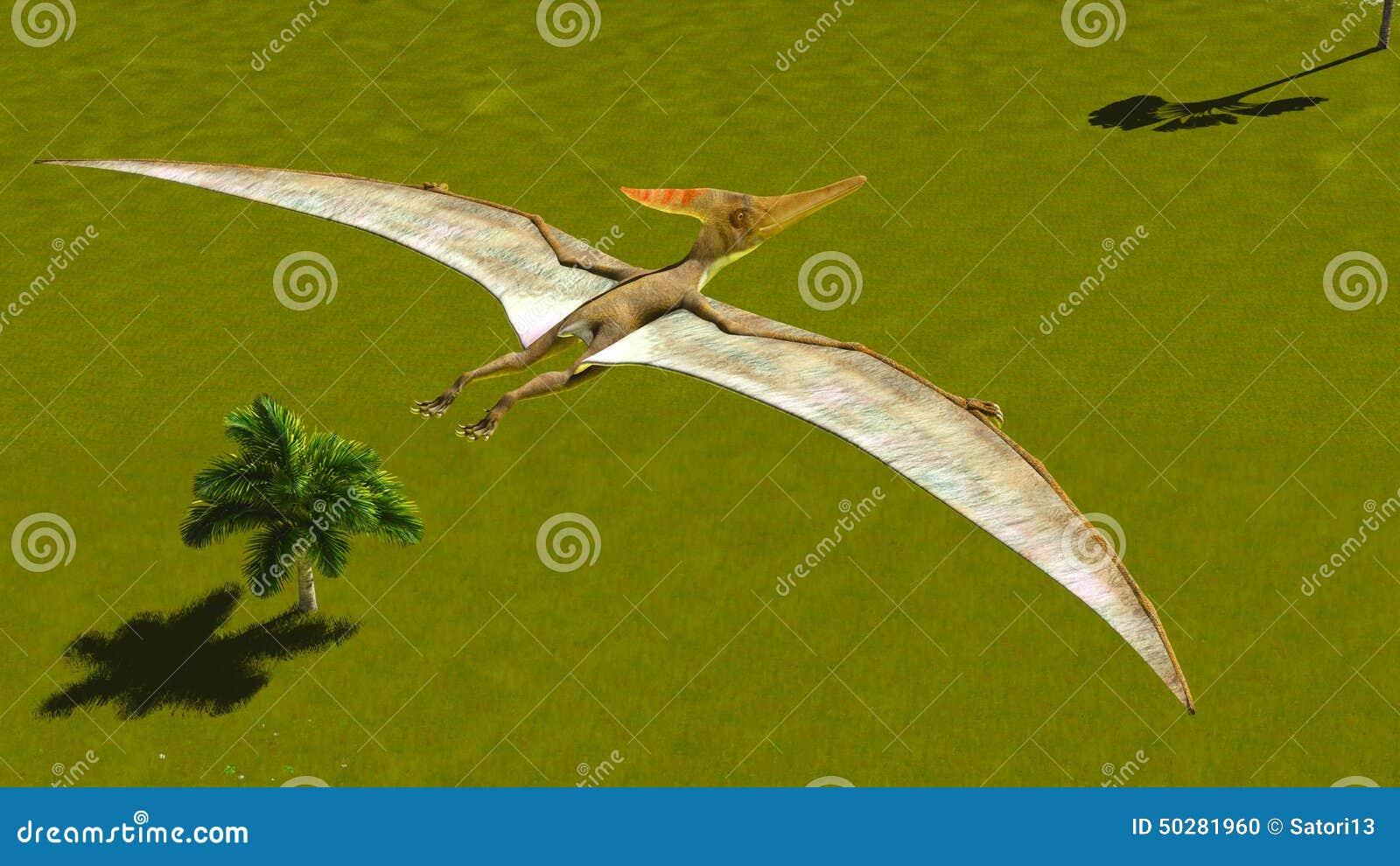 在土地的飞行翼手龙.浮潜水