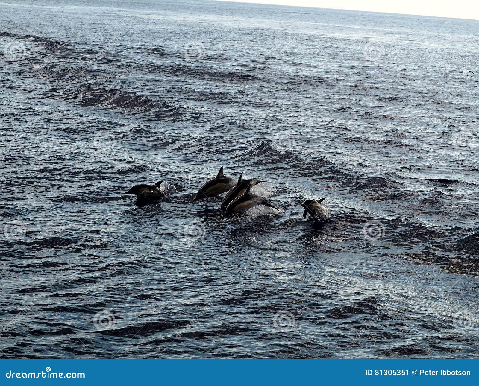 飞行通过空气的海豚