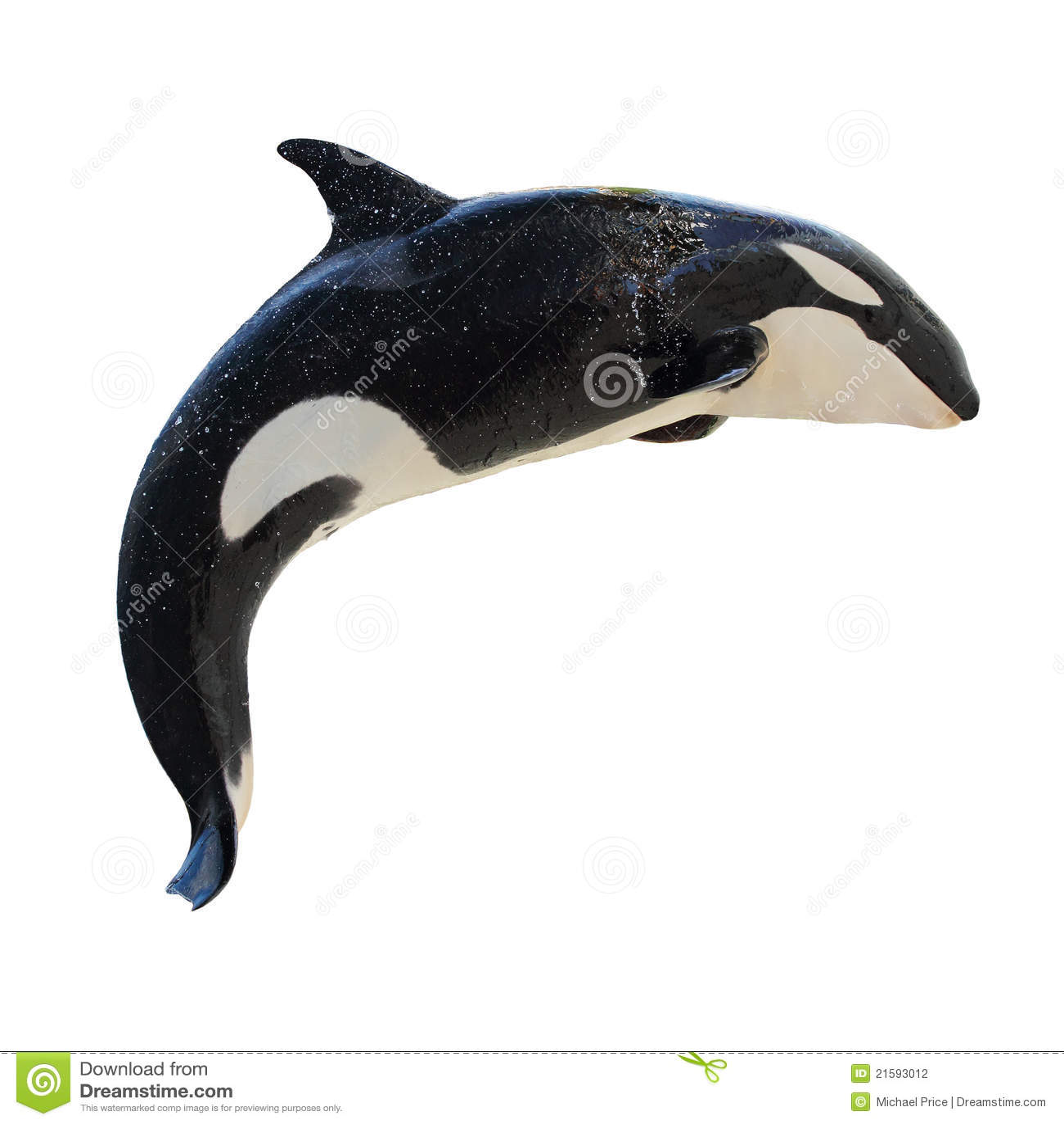 飞跃海怪orcinus的killerwhale
