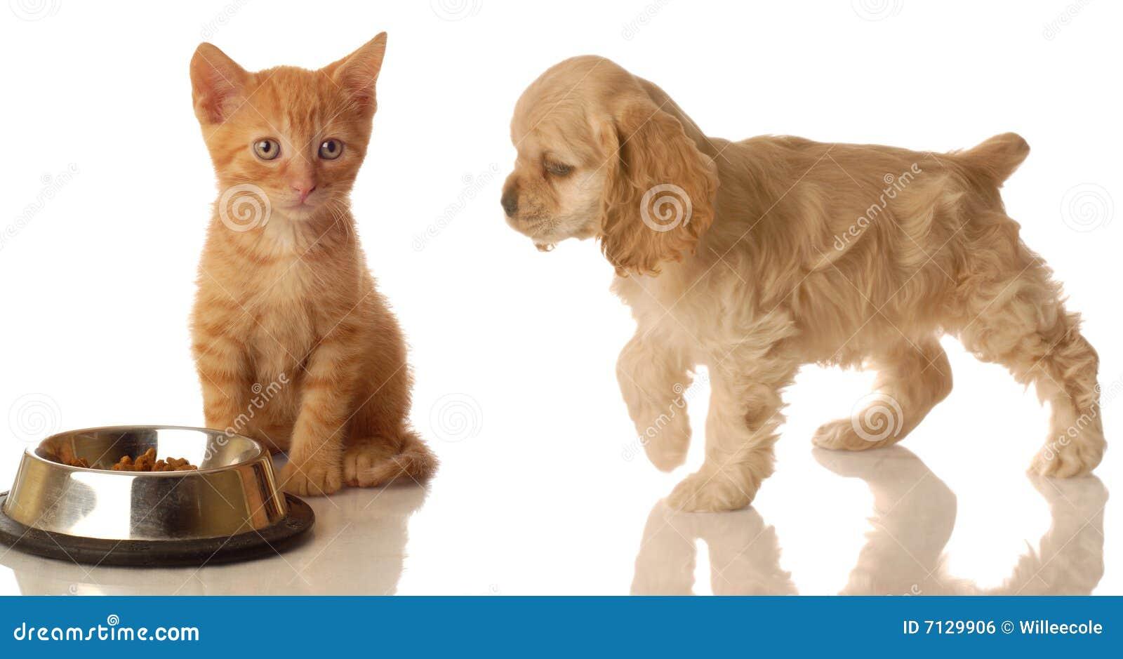食物小猫小狗