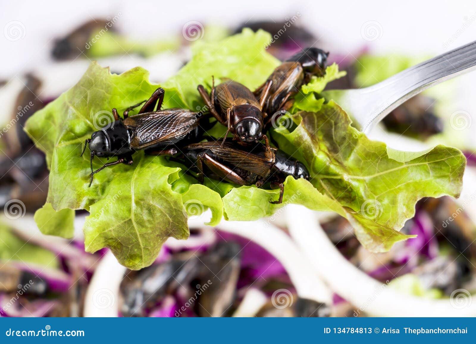 食物昆虫:为吃油煎的蟋蟀昆虫当食品项目在匙子和在沙拉菜,这是可食好的蛋白质来源