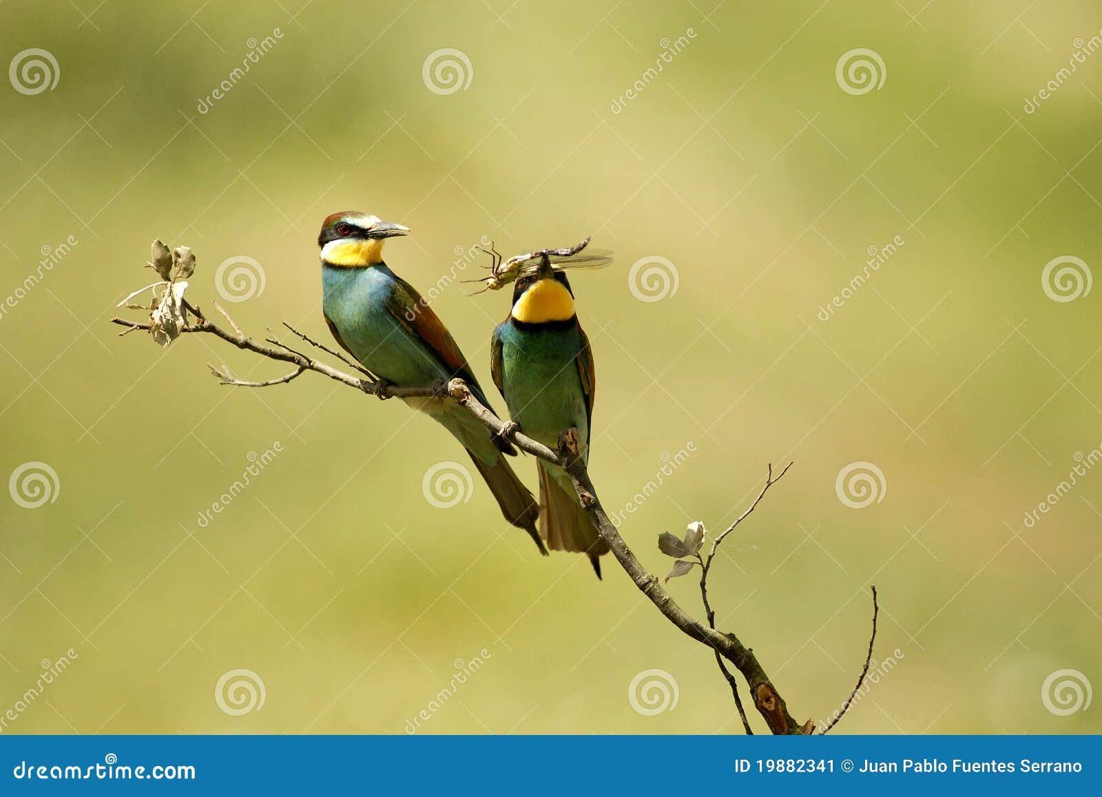 食情趣食物乎知蜂鸟牌子图片