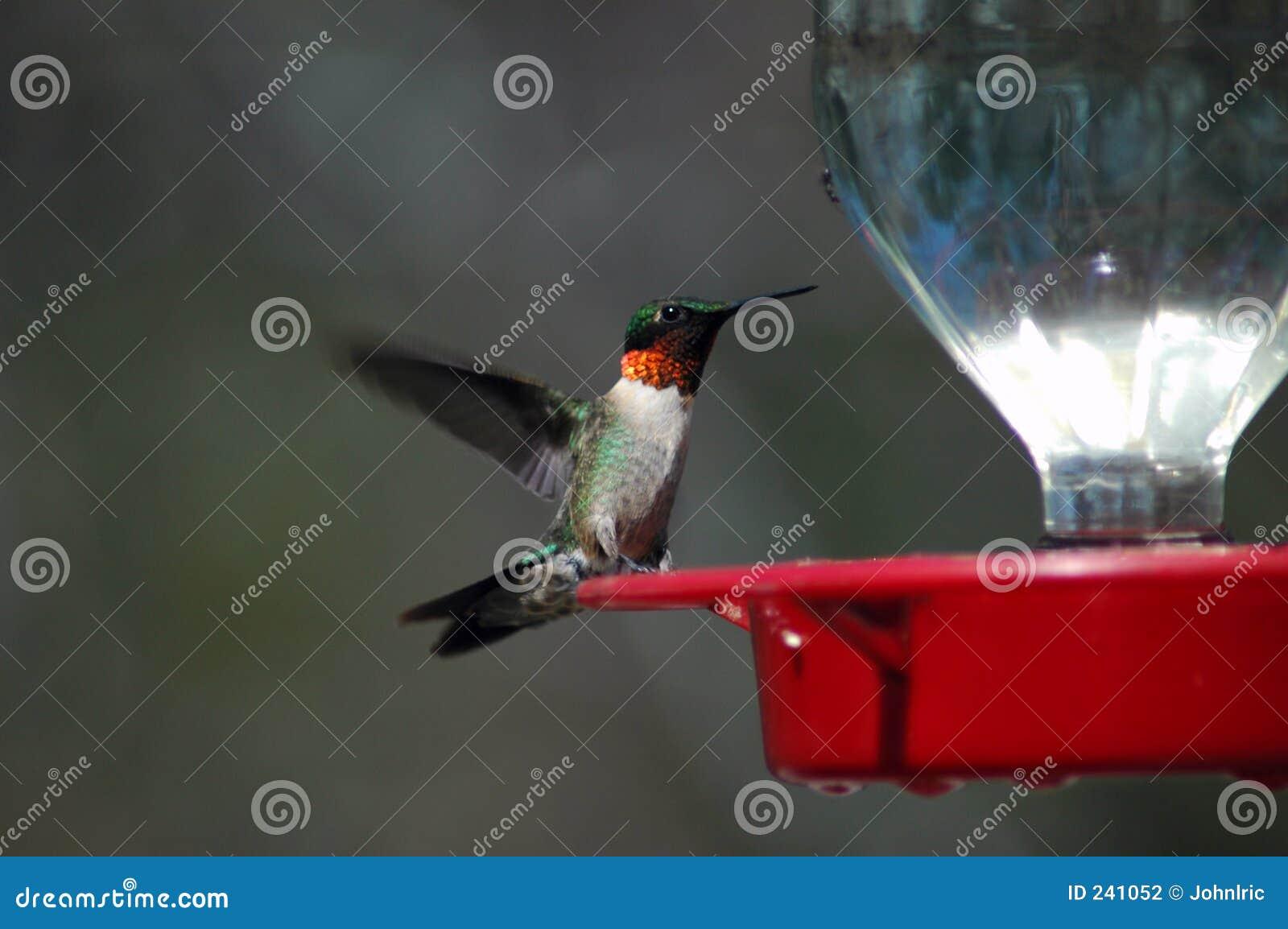 馈电线蜂鸟