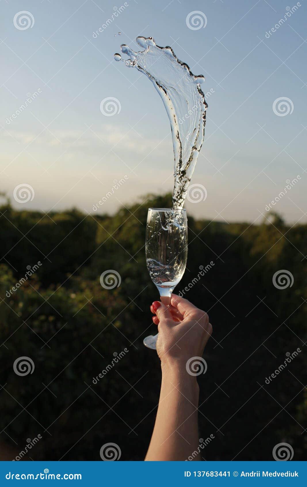 香槟蝇的春天从玻璃的
