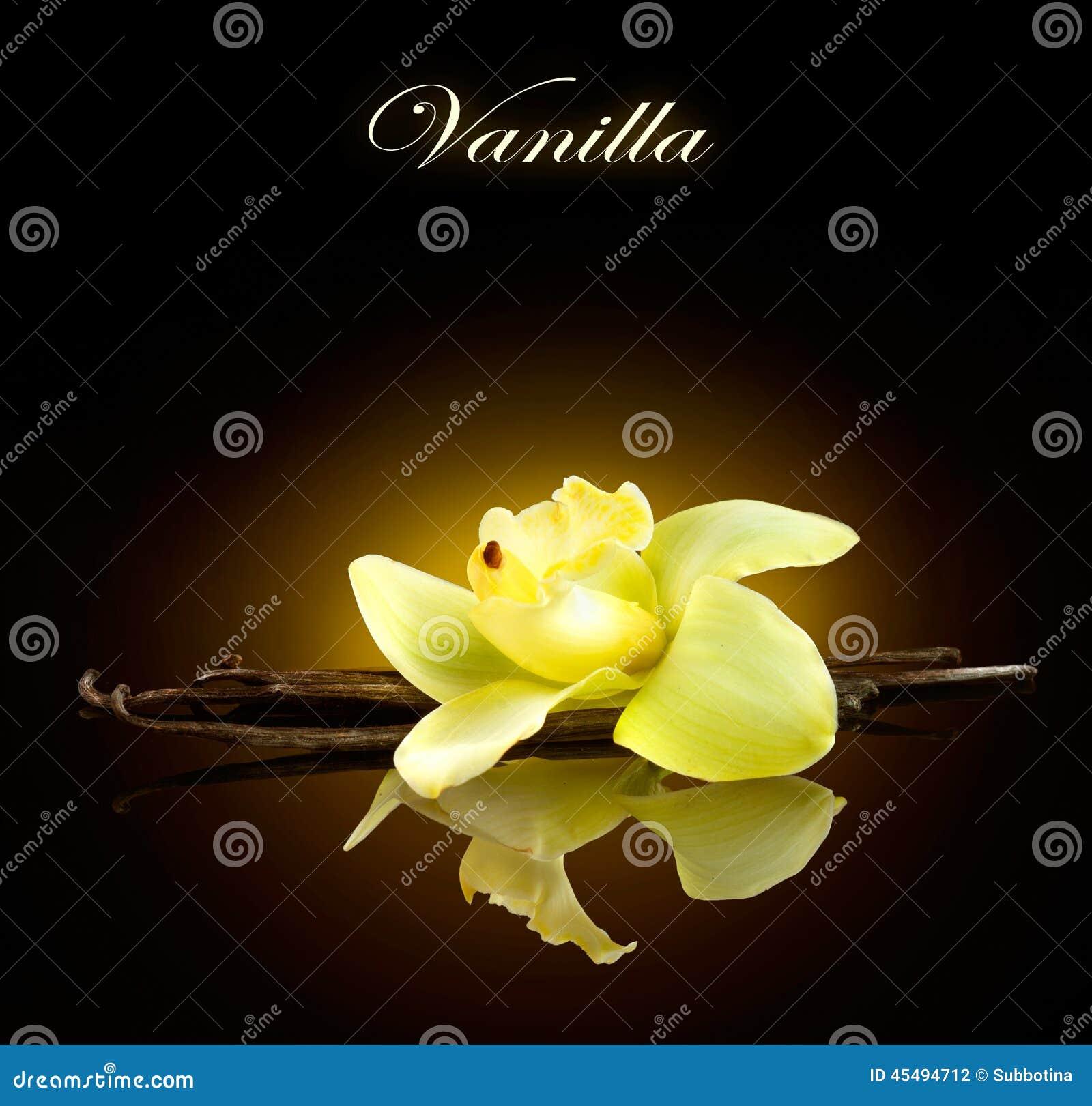 香草 香草荚和花