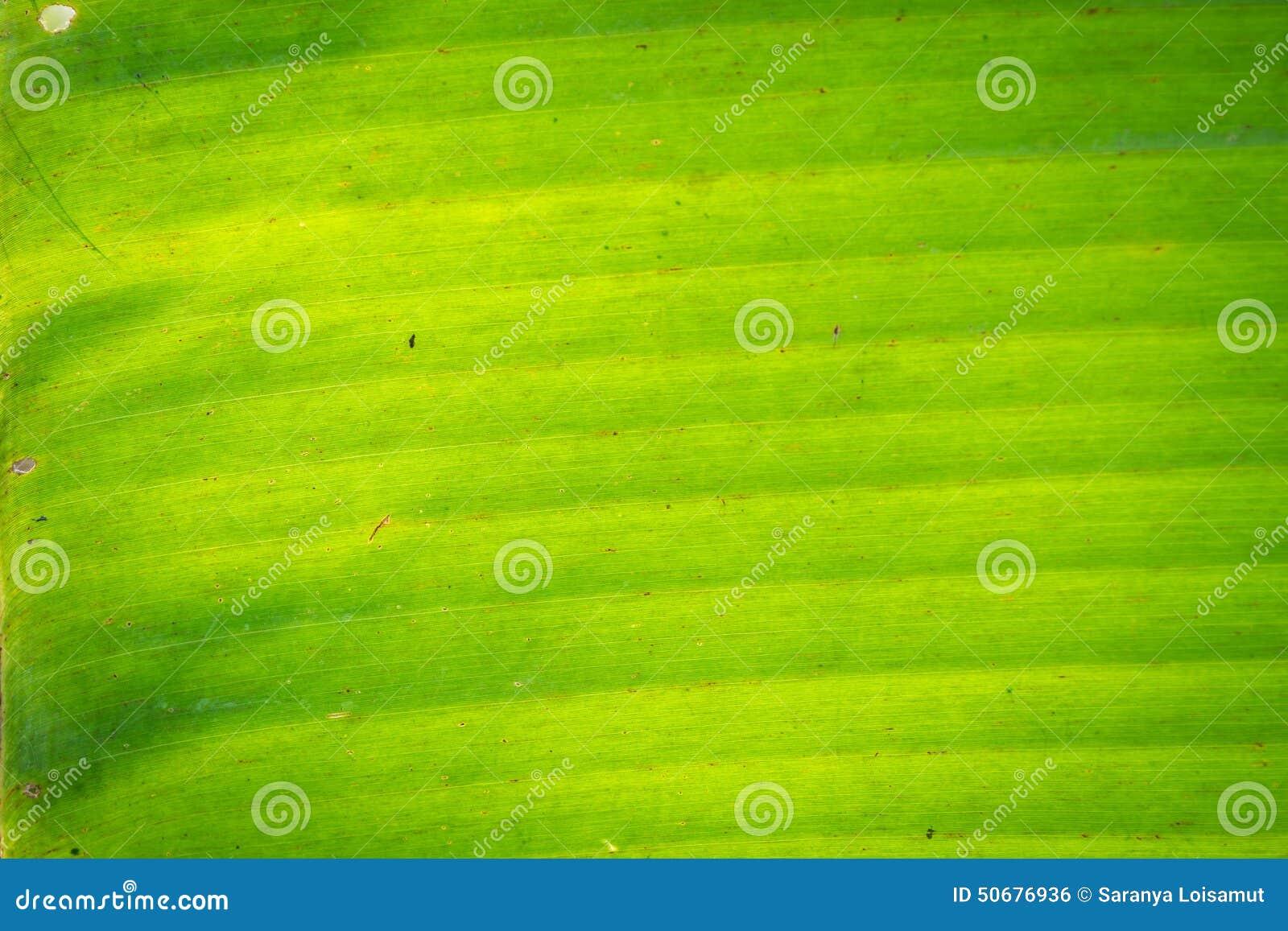 Download 香蕉叶子 库存照片. 图片 包括有 容器, 鲤鱼, 详细资料, 干燥, 计数, 香烟, 背包, beauvoir - 50676936