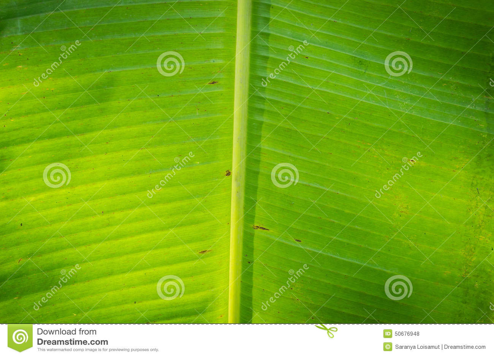 Download 香蕉叶子 库存照片. 图片 包括有 生气勃勃, 容器, 环境, 植物群, 鲤鱼, 楼梯栏杆, 详细资料, 照亮 - 50676948