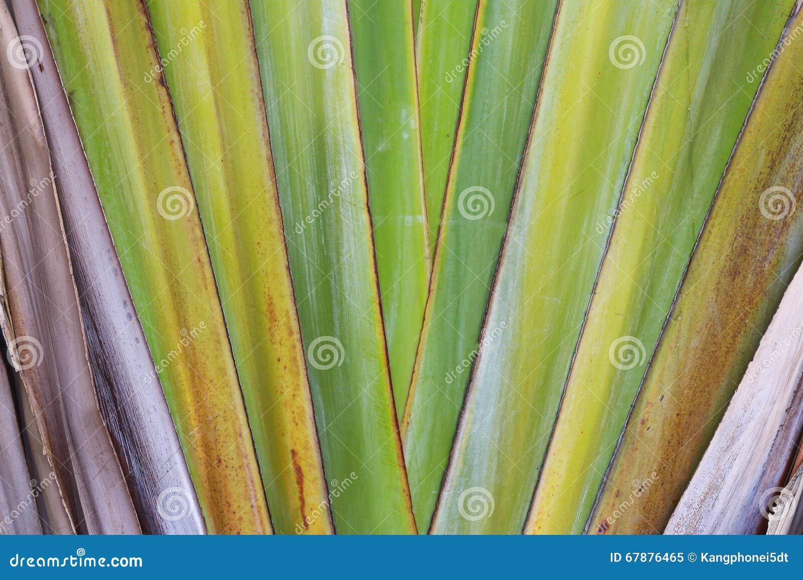 香蕉大明亮的接近的绿色留下结构树
