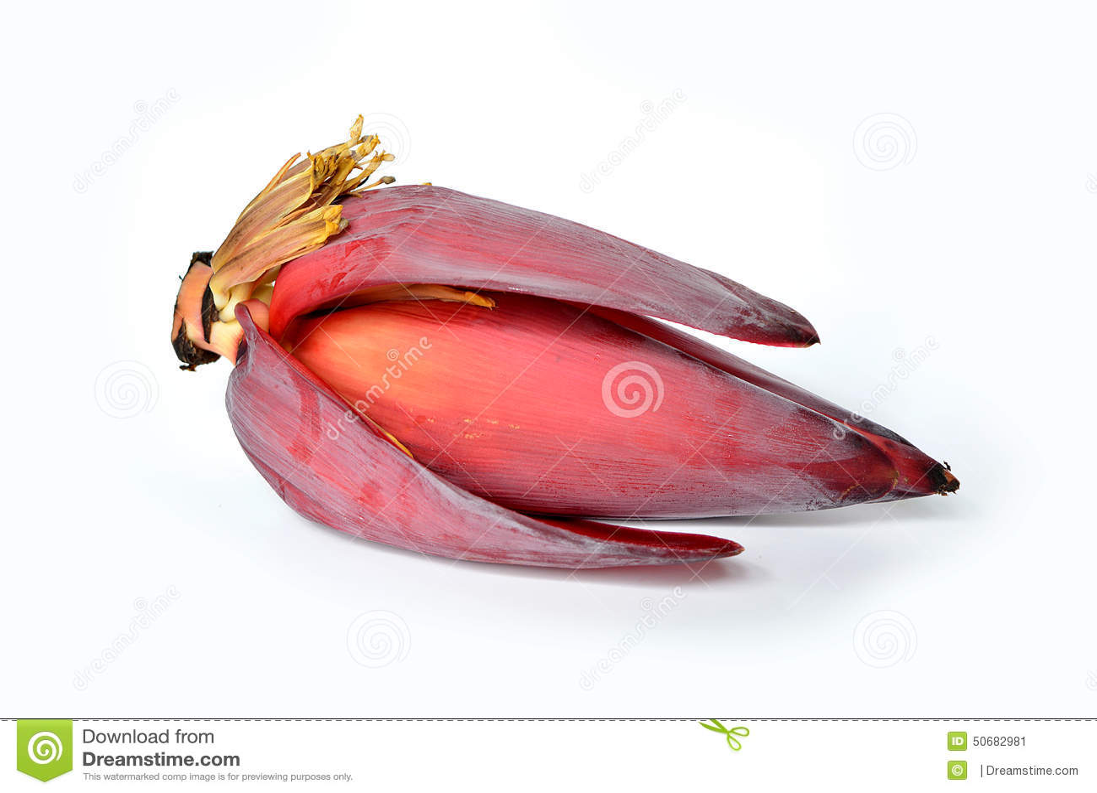 Download 香蕉开花 库存图片. 图片 包括有 沙拉, 楼梯栏杆, 查出, 果子, 可口, 背包, 食物, 密林, 详细资料 - 50682981