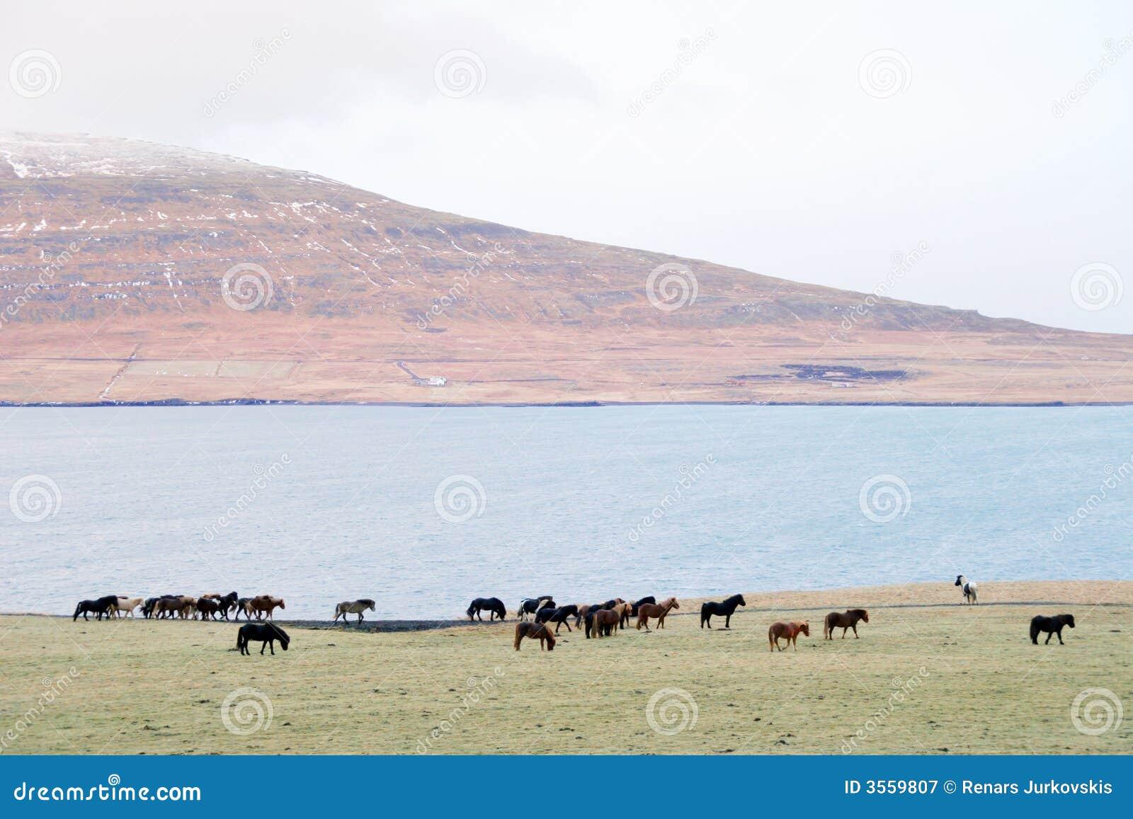 马冰岛当地人