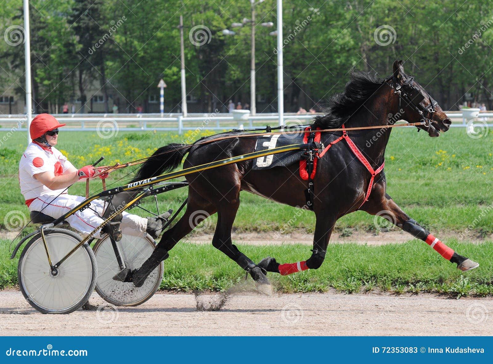 马小跑品种在行动夏天