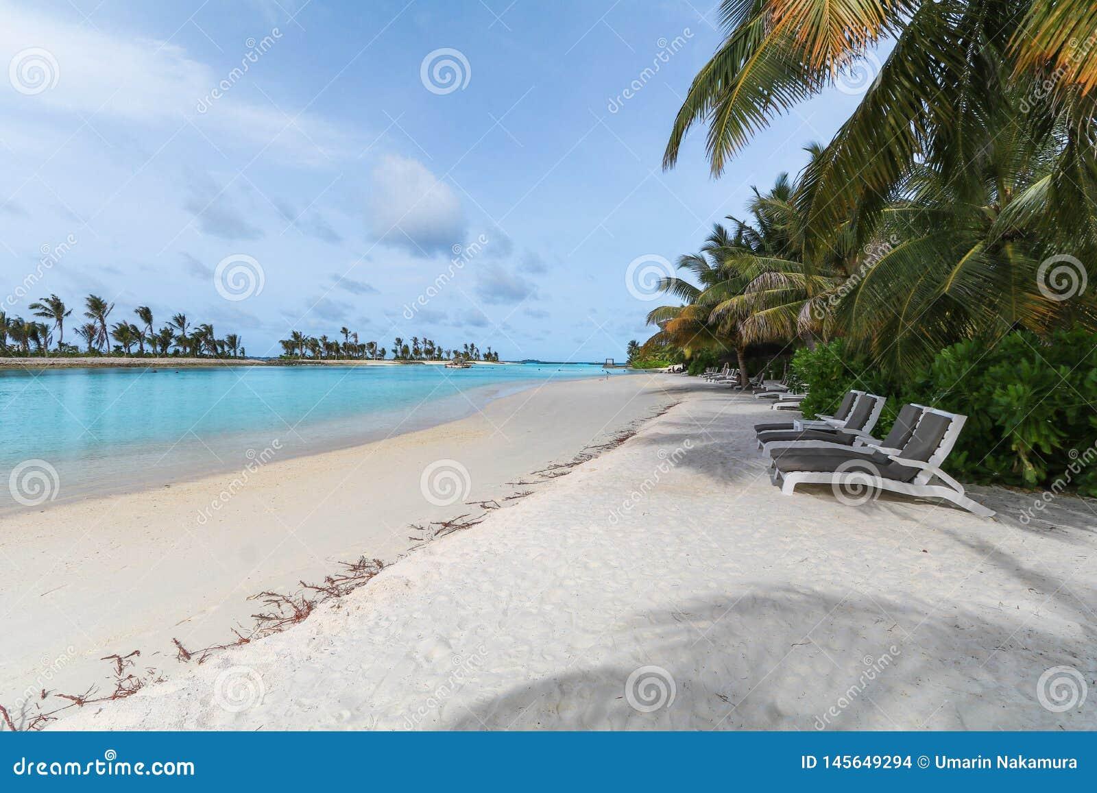 马尔代夫、美丽的绿松石水域和白色沙滩的令人惊讶的海岛有天空蔚蓝背景为假日假期