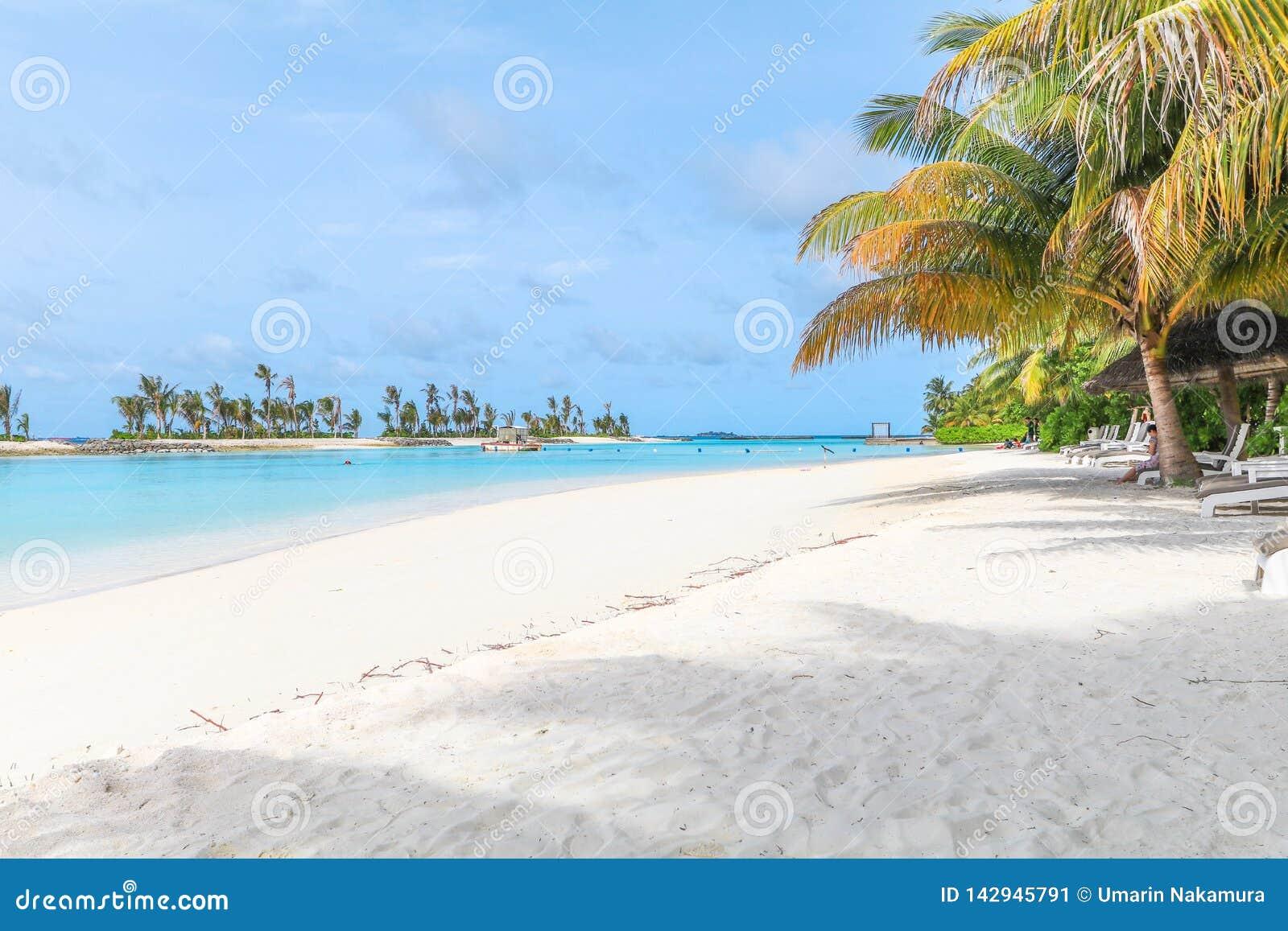 马尔代夫、美丽的绿松石水域和白色沙滩的令人惊讶的海岛有天空蔚蓝背景为假日