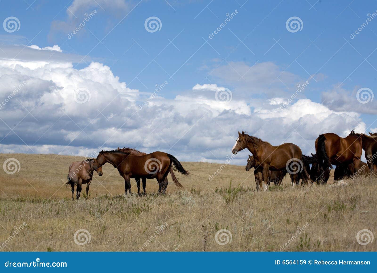 马母马牧场地季度
