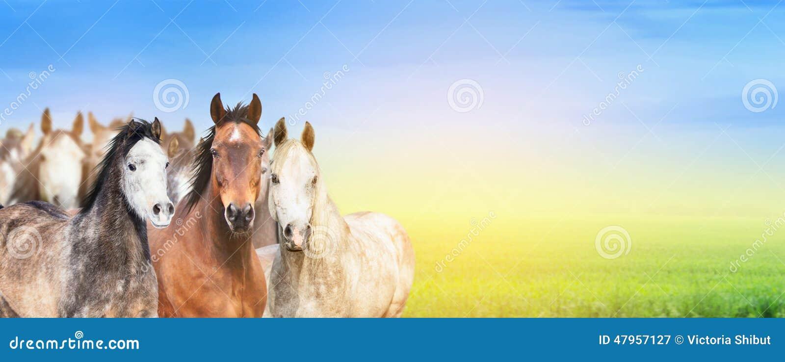 马牧群在夏天牧场地背景,天空和阳光,网站的横幅的