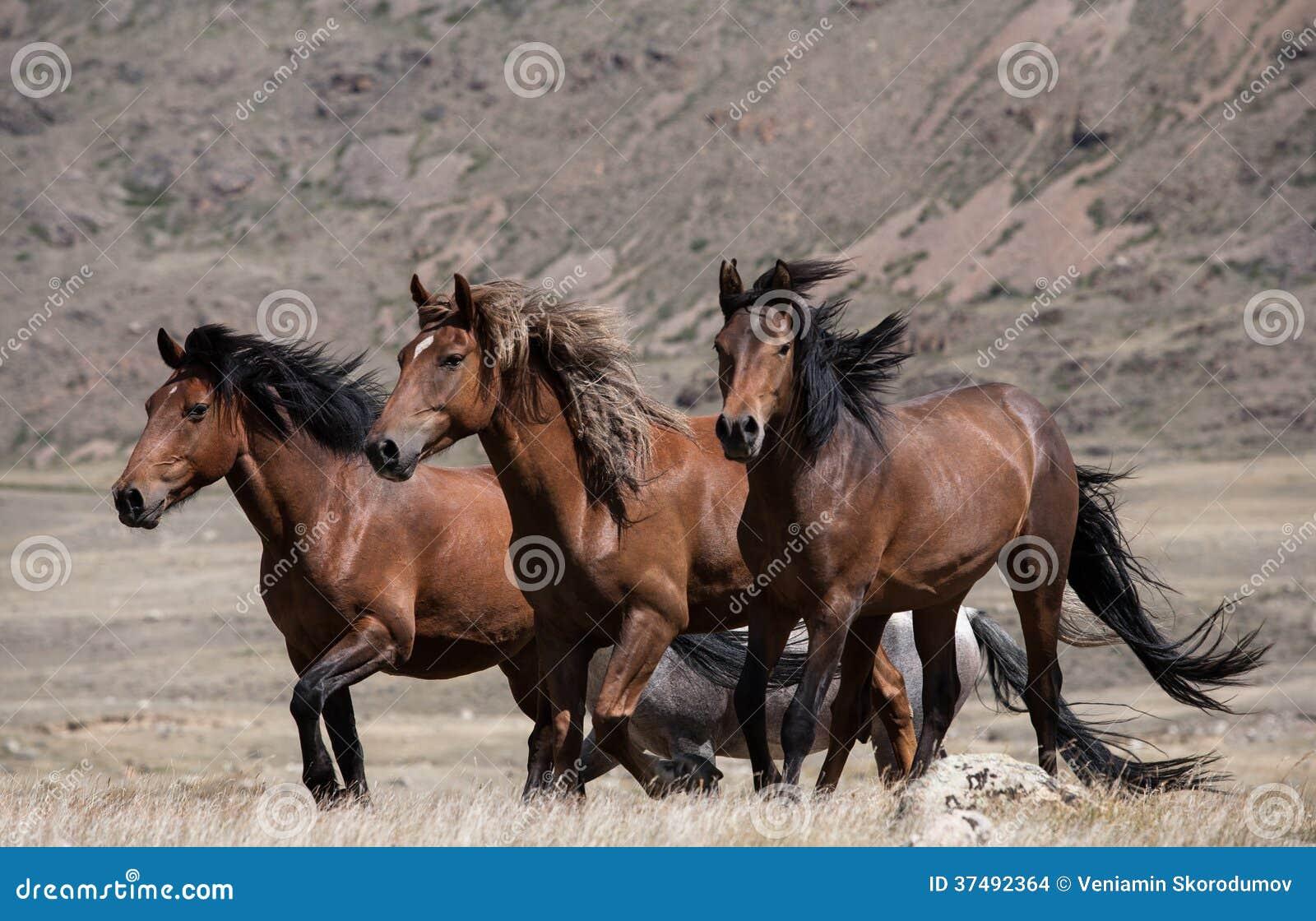 马牧群在山背景的