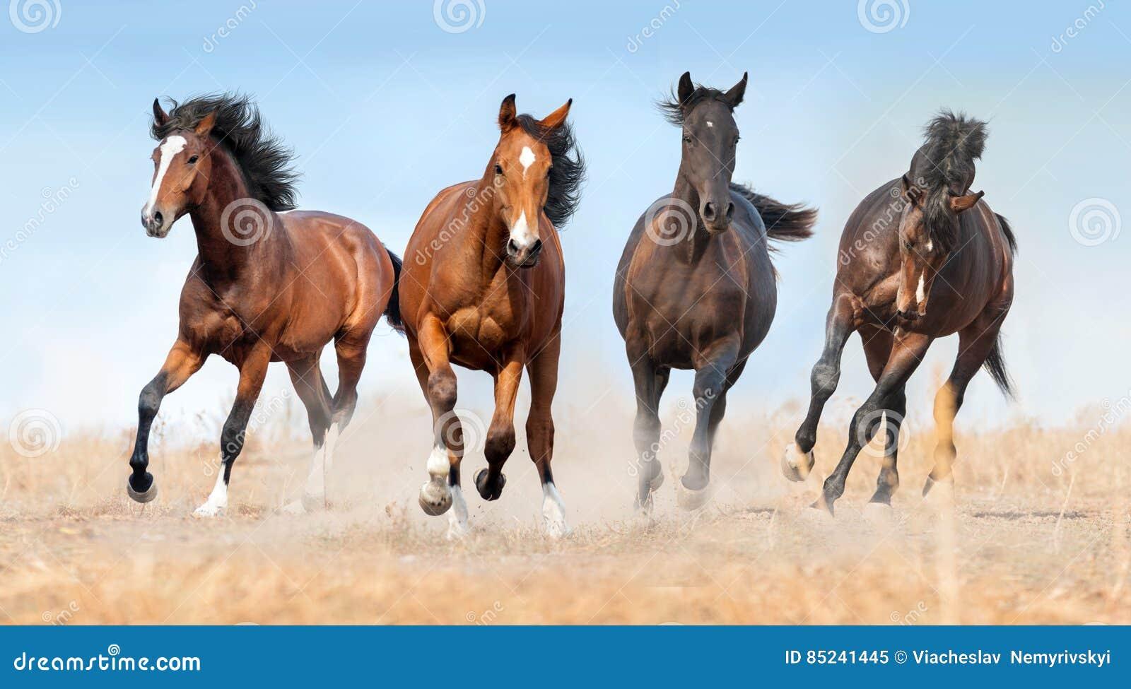 马牧群奔跑