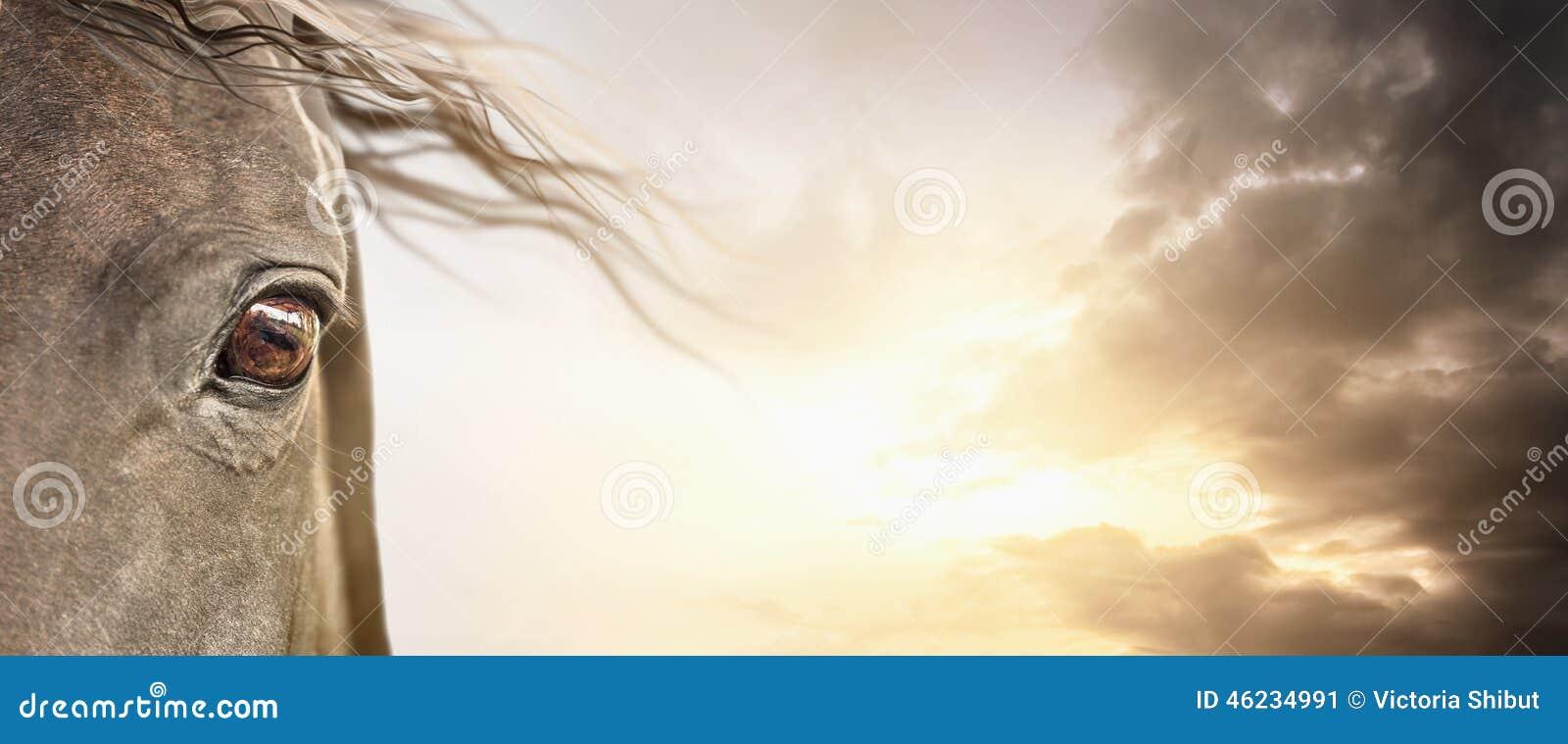 马的眼睛与鬃毛的在多云天空,横幅