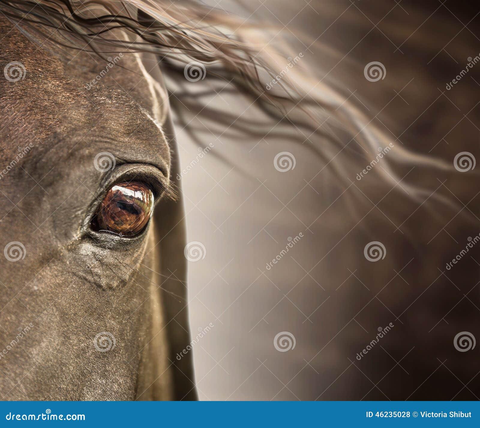 马的眼睛与鬃毛的在黑暗的背景