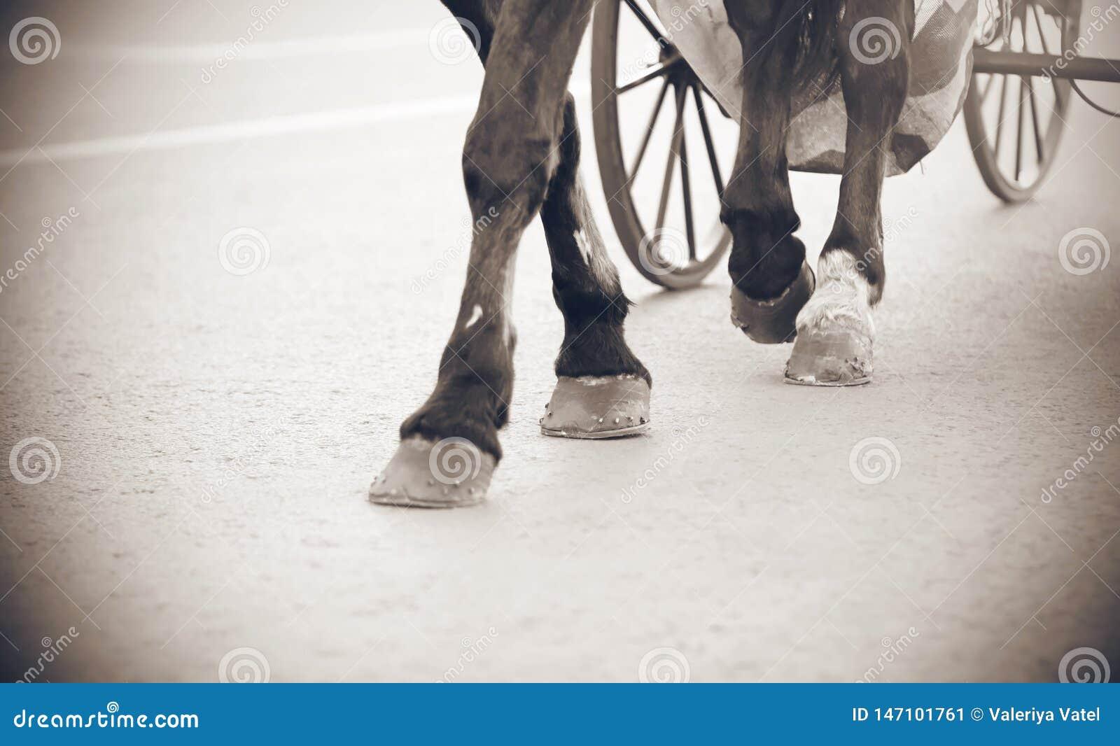 马的腿的黑白图象