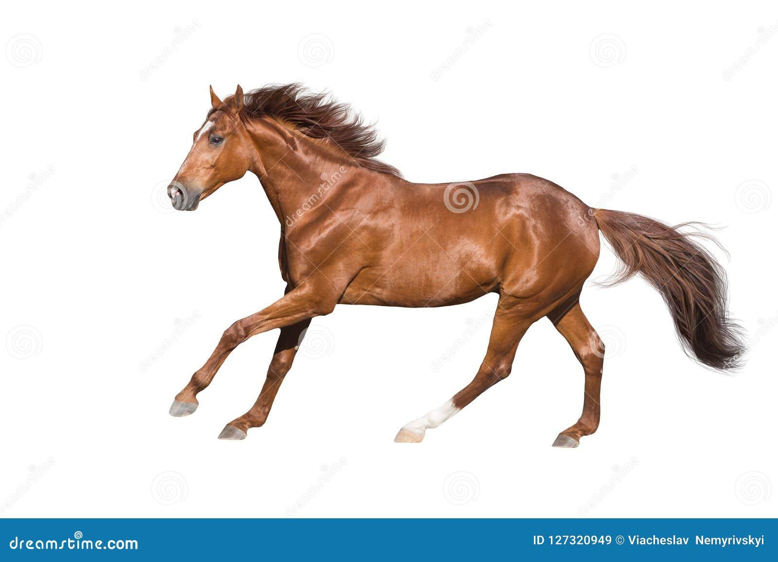 马符号向量白色
