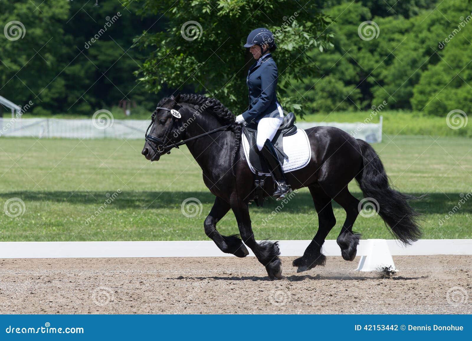 驯马USEF训练水平测试2