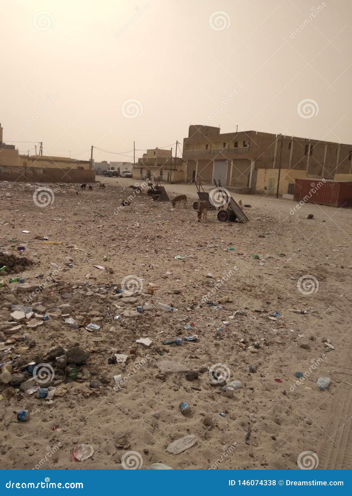 驴和推车分配中心