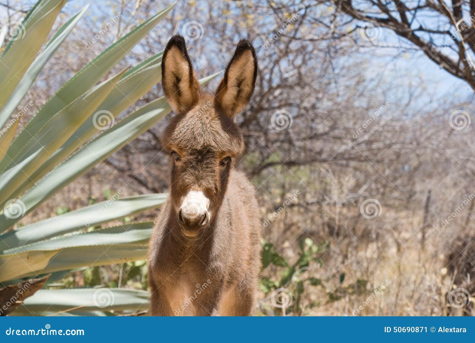 Download 驴驹 库存图片. 图片 包括有 哺乳动物, 婴孩, 逗人喜爱, 农场, 本质, browne, 题头, 毛皮 - 50690871