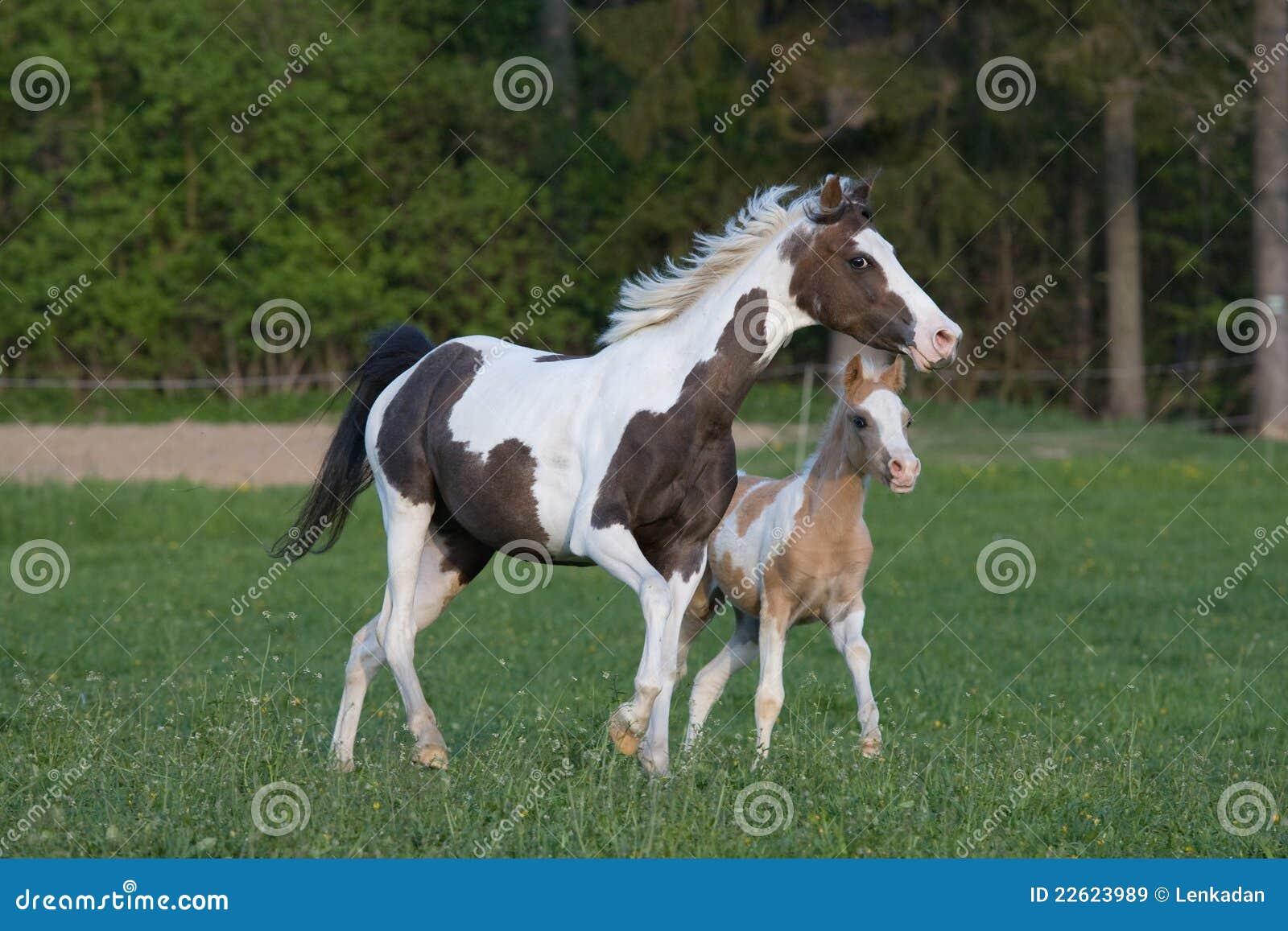 驹小的母马小马
