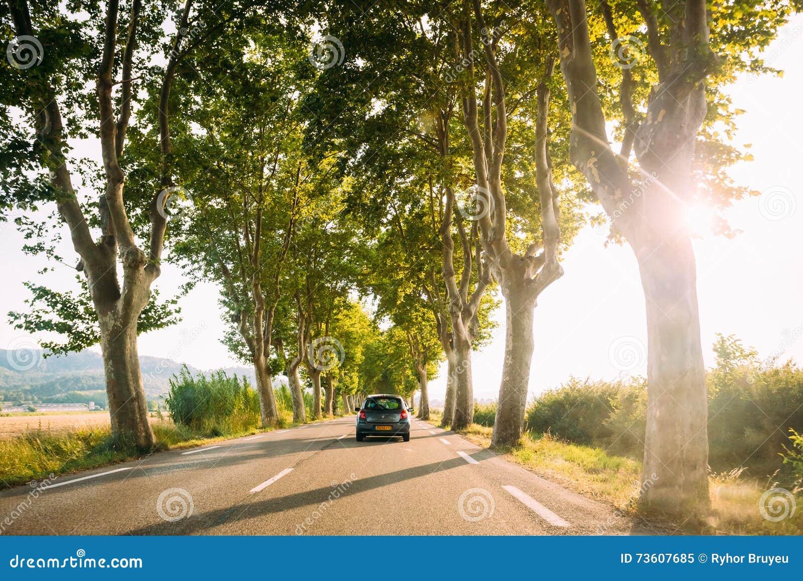 驾车在乡下公路标示用树 明亮的阳光