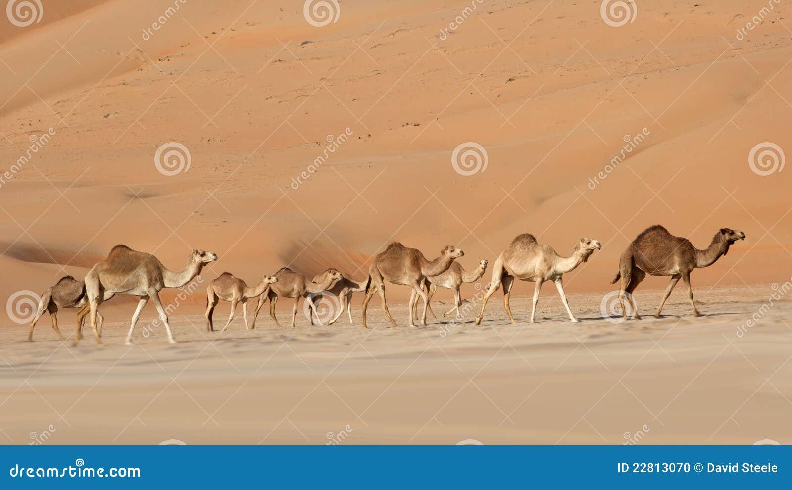骆驼倒空季度