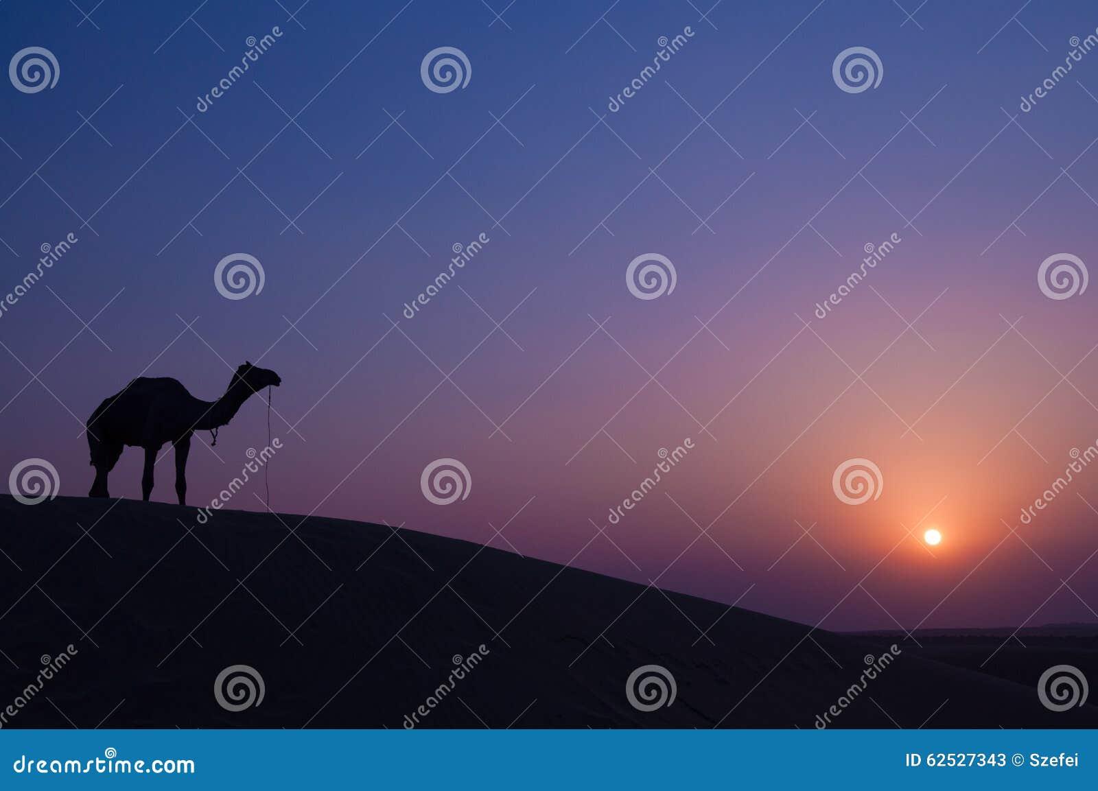 骆驼和风景