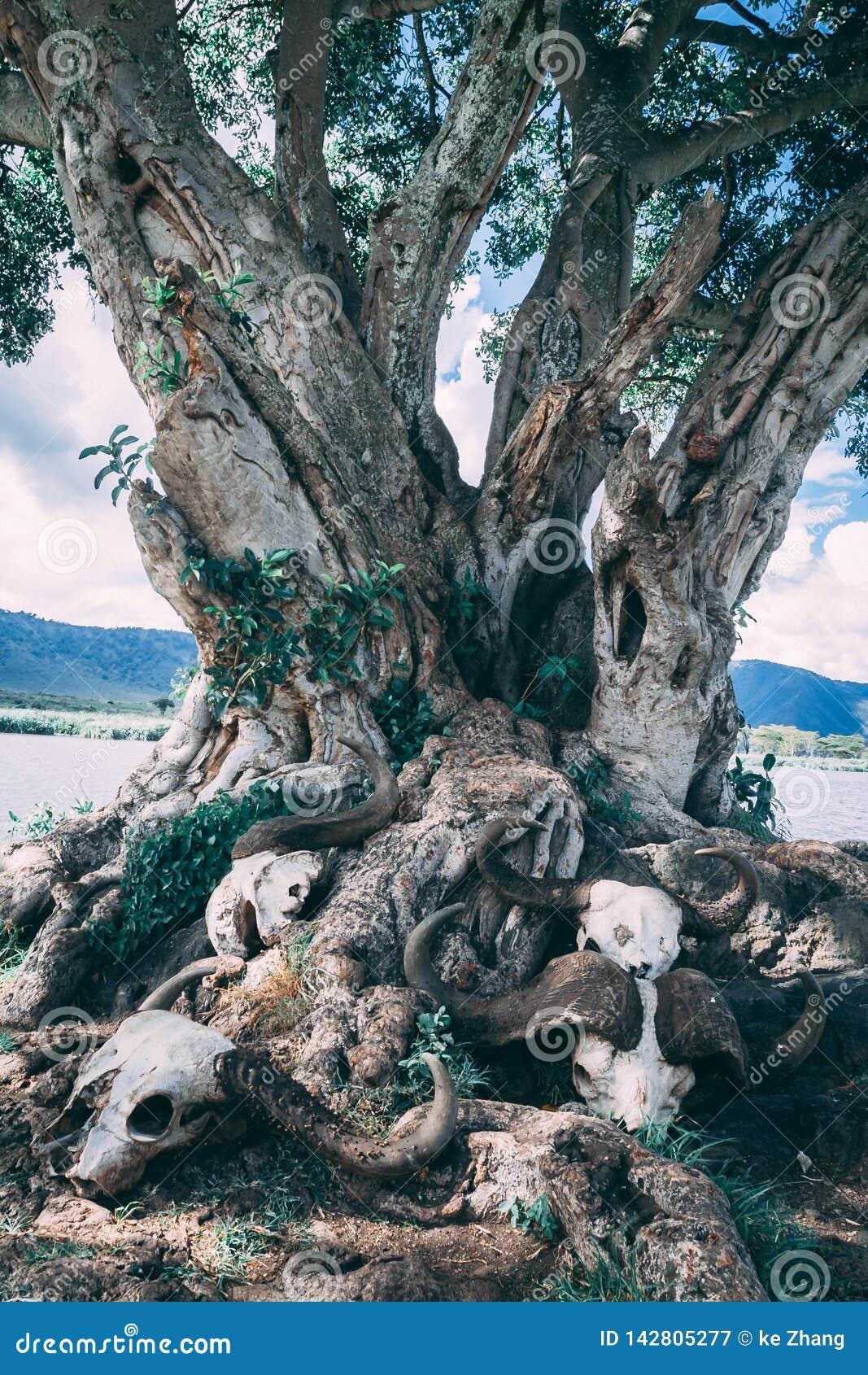 骨骼在树下在非洲