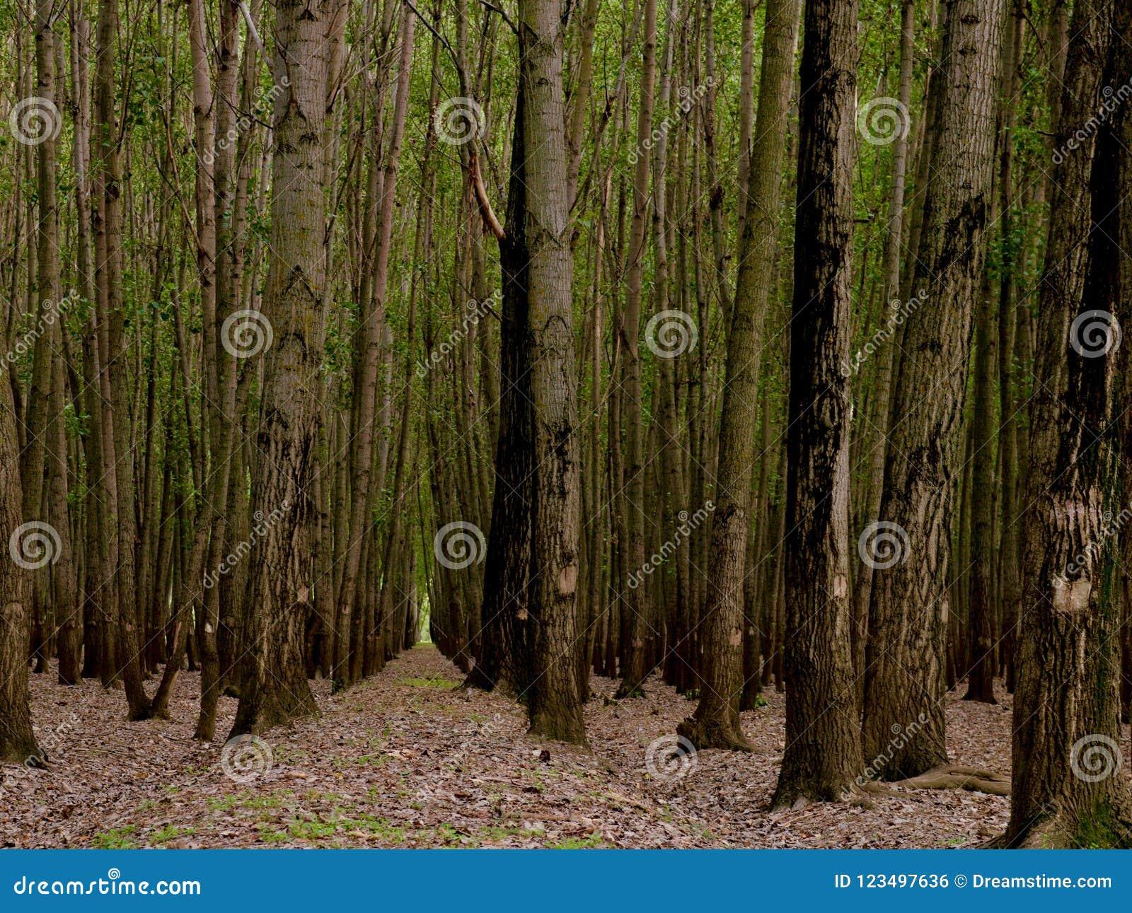高发辫在森林托儿所在克什米尔谷印度