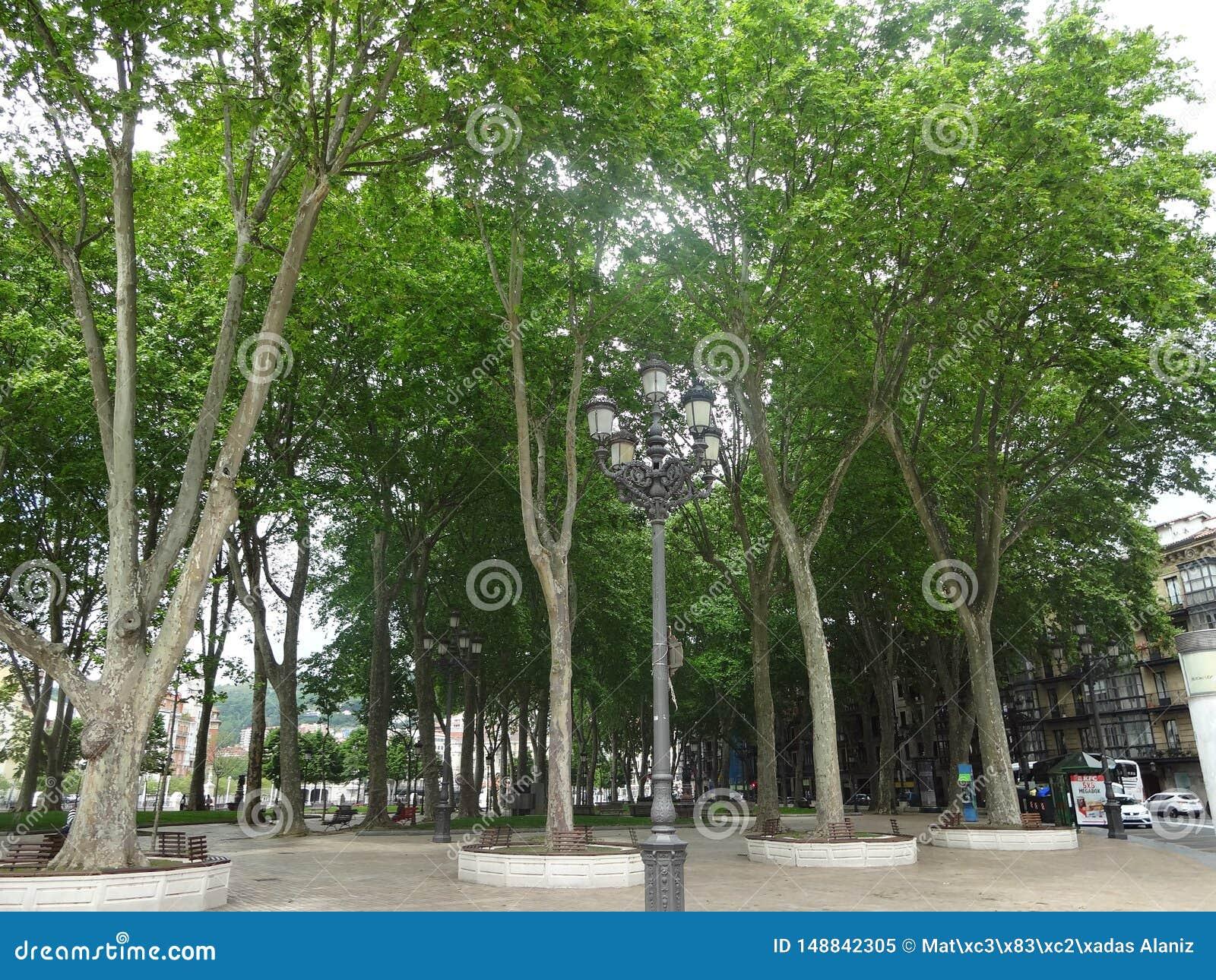 高大的树木停放