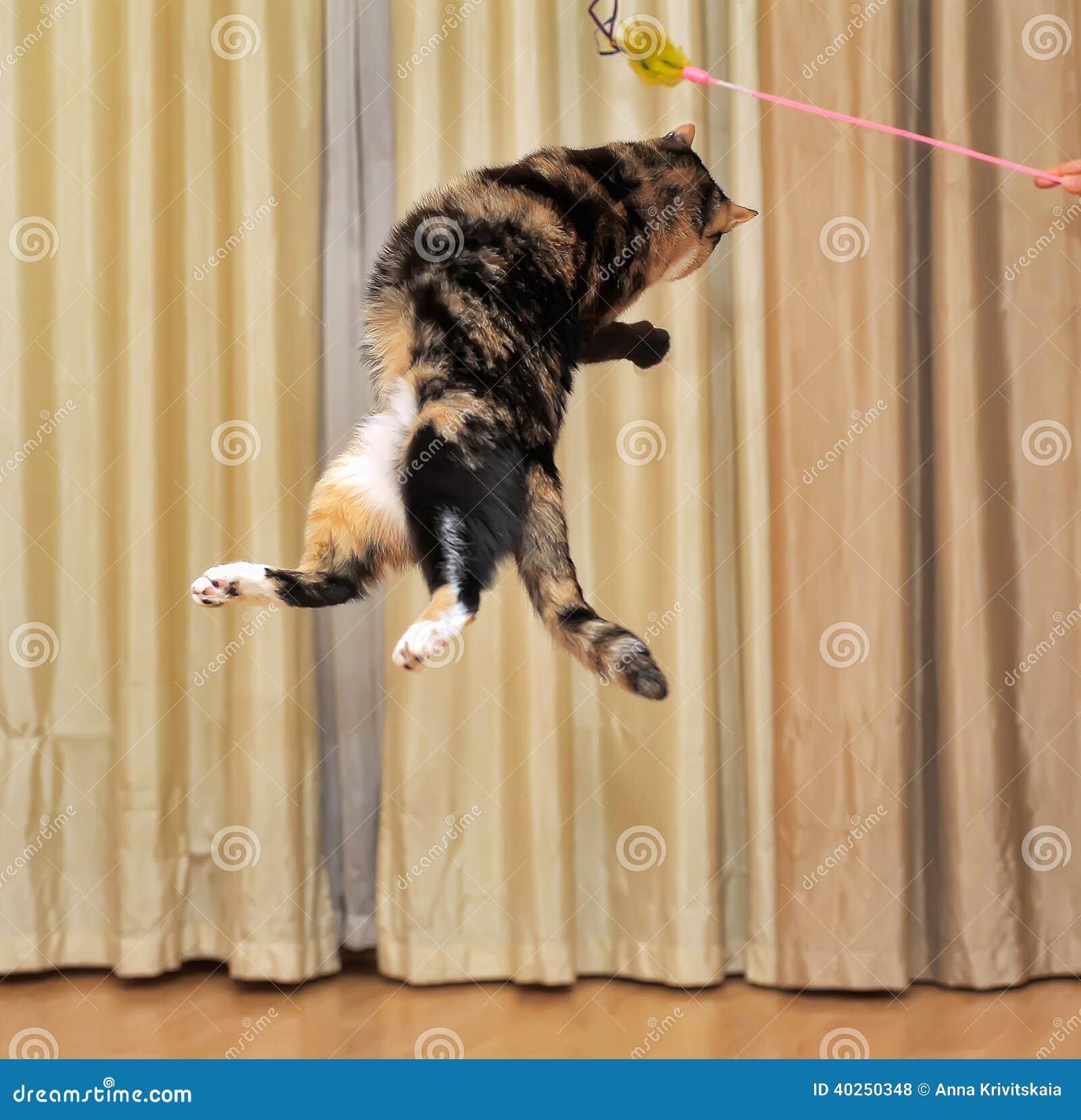 高跳跃的猫