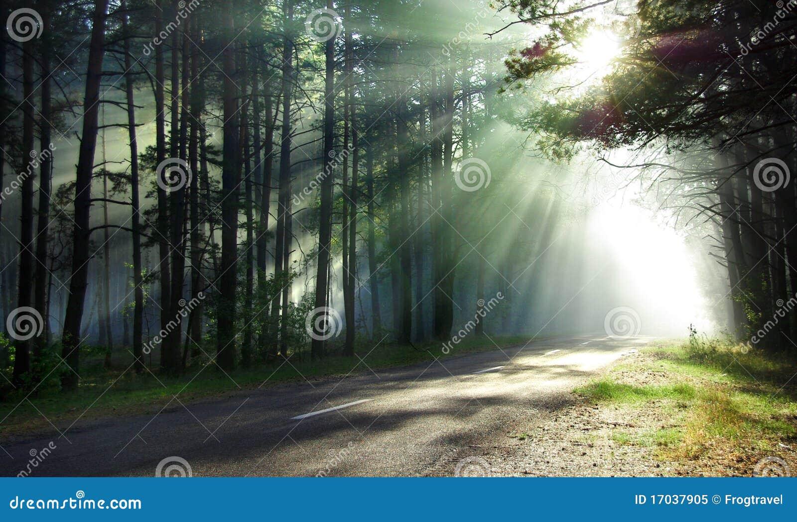 魔术的森林
