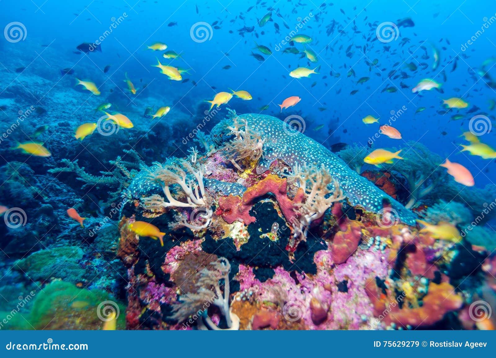 鱼和生态系海底