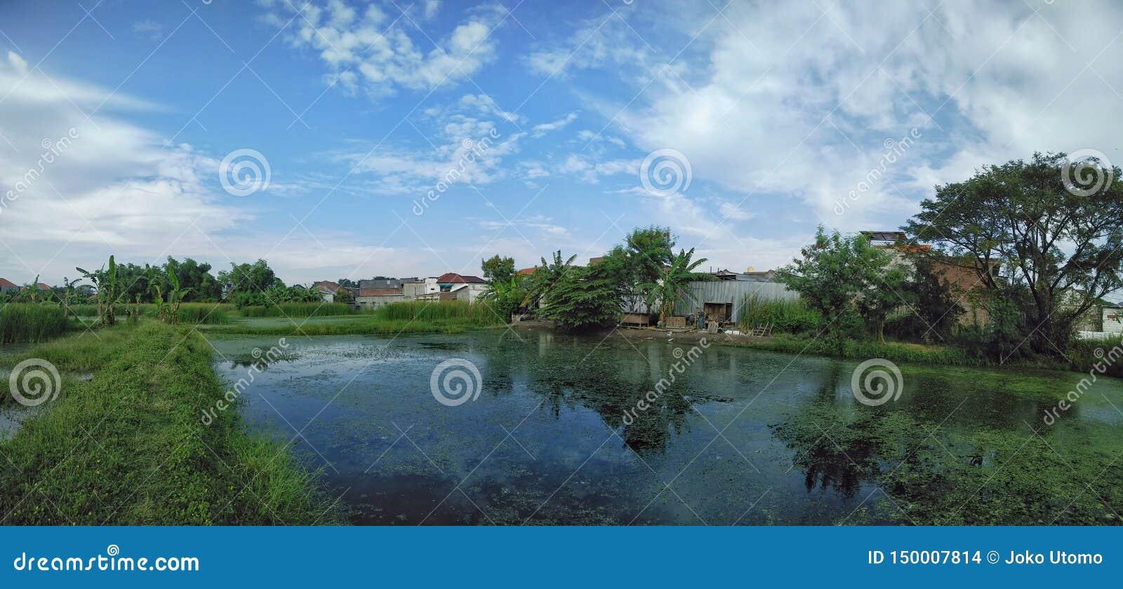 鱼池和清楚的天空蔚蓝背景风景看法