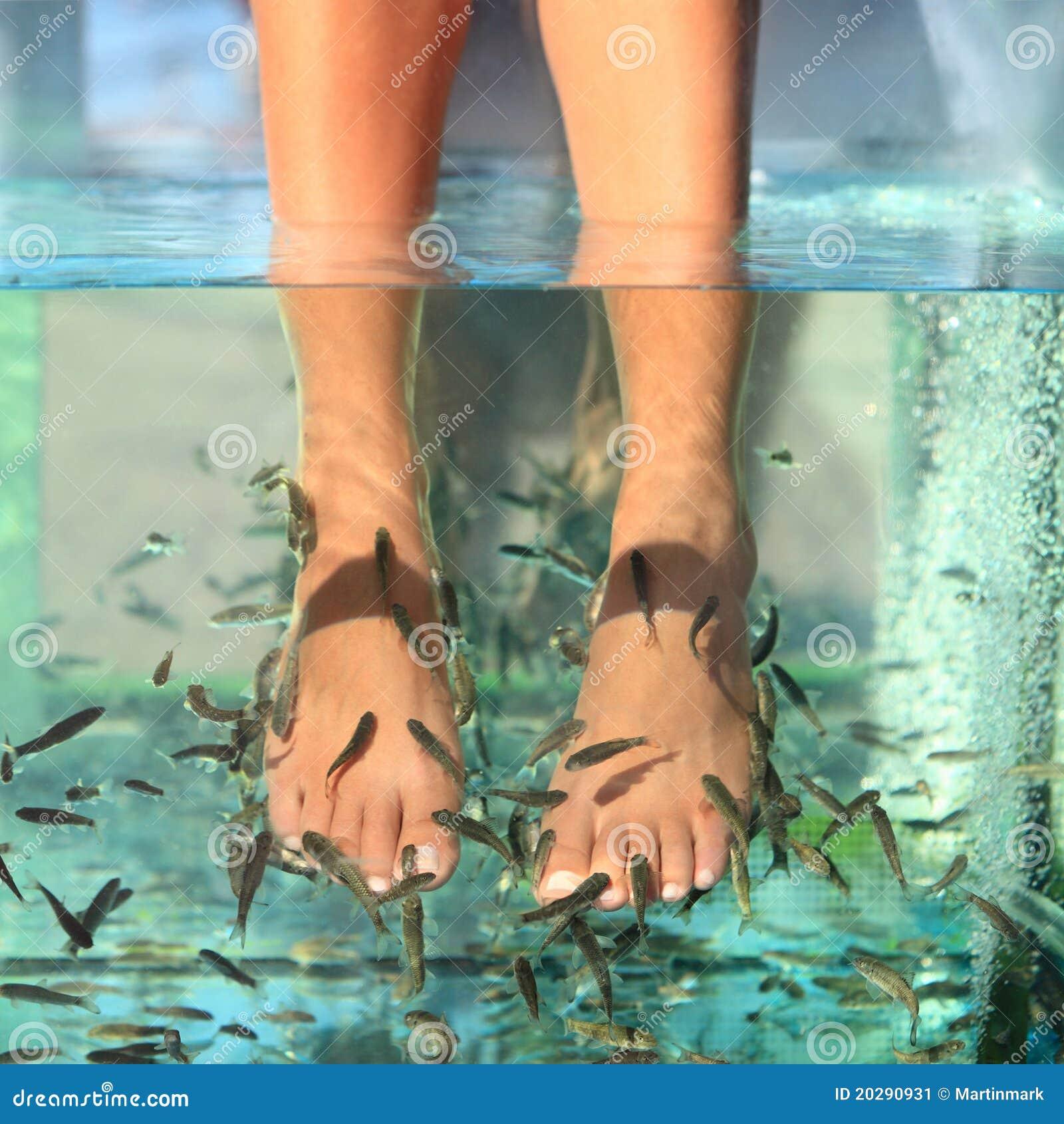 鱼温泉皮肤处理