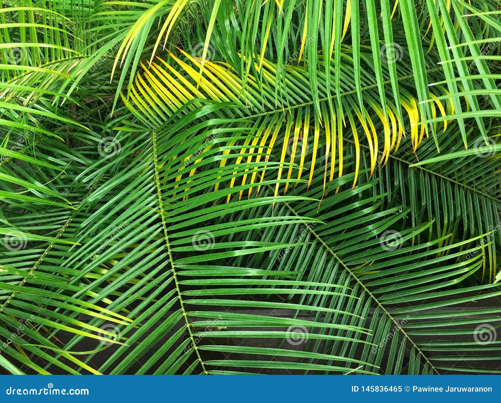 鲜亮的棕榈叶状体离开背景 E