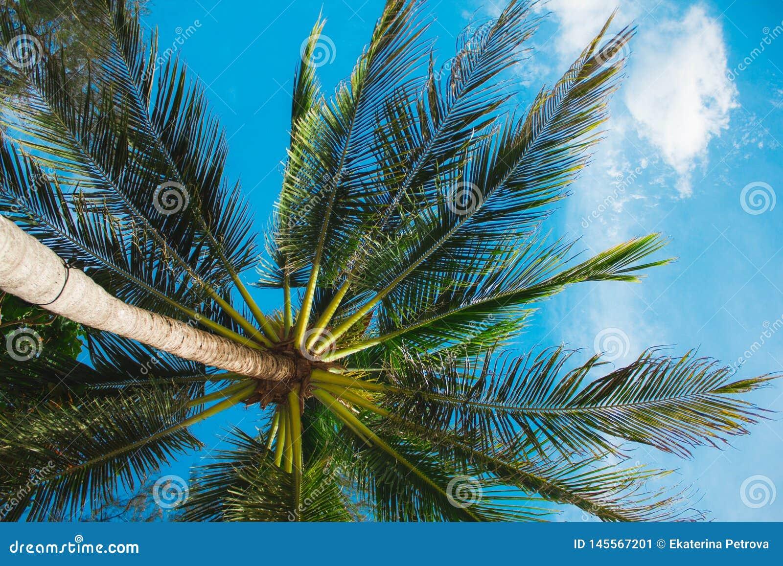 鲜绿色的在浅绿色的被弄脏的背景的叶子热带蕨 与bokeh的特写镜头 美丽的布什在热带庭院里