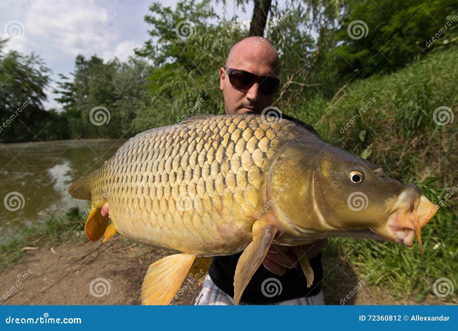 鲤鱼和渔夫,鲤鱼渔战利品
