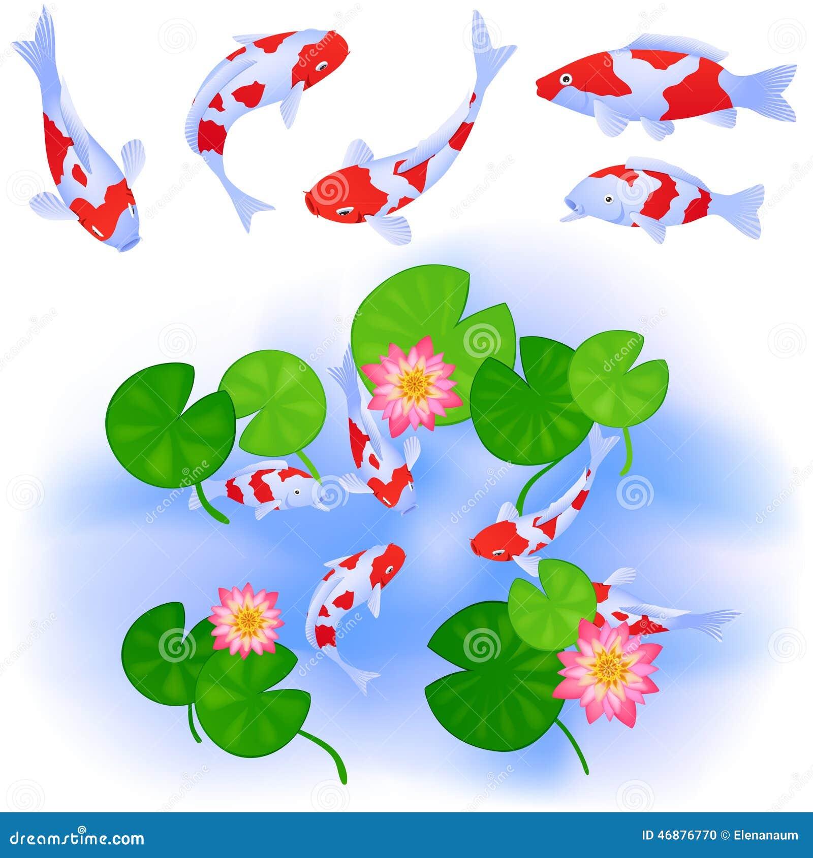 鲤鱼和莲花在池塘