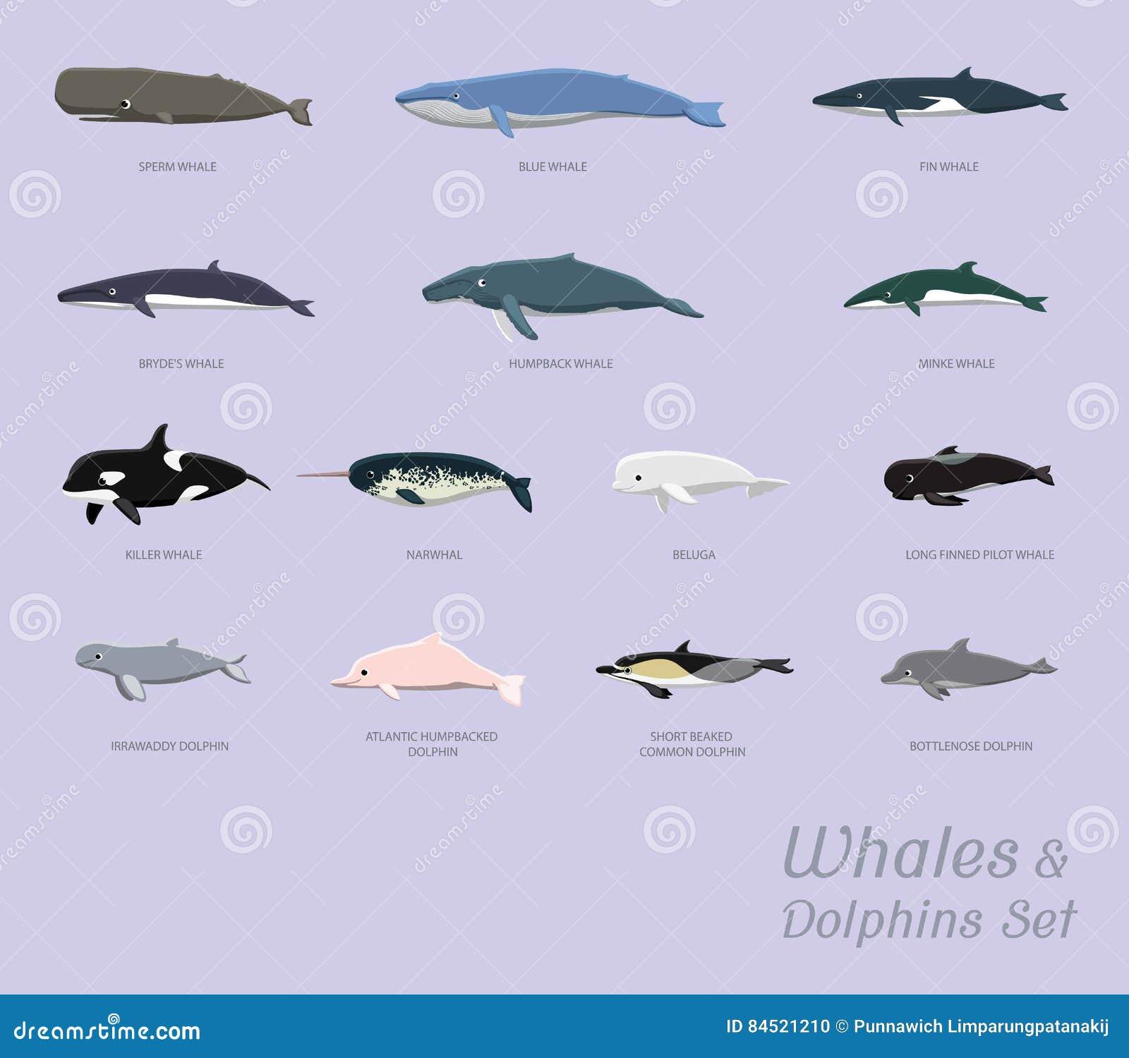 鲸鱼和海豚设置了动画片传染媒介例证
