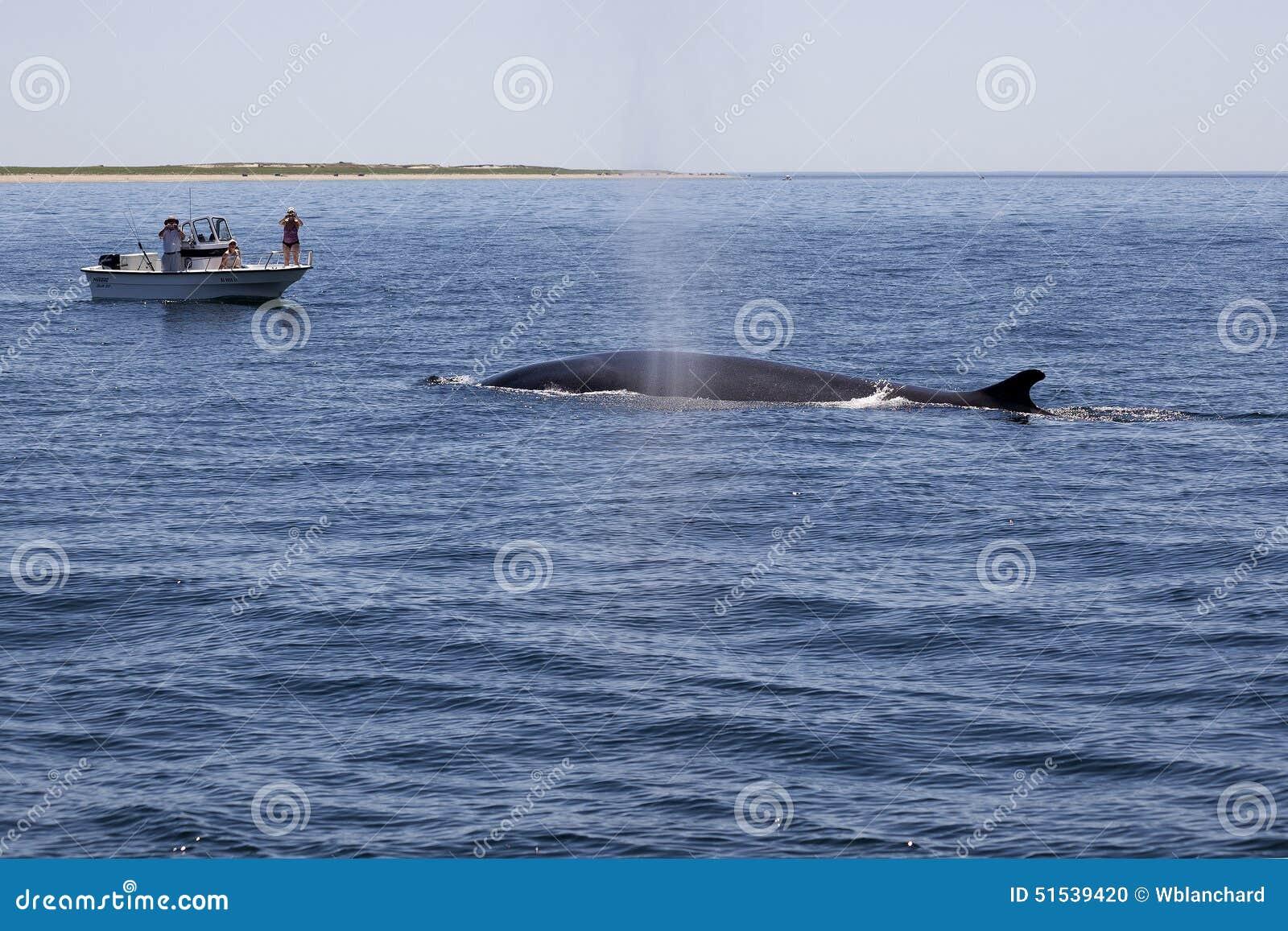 鲸鱼看守人