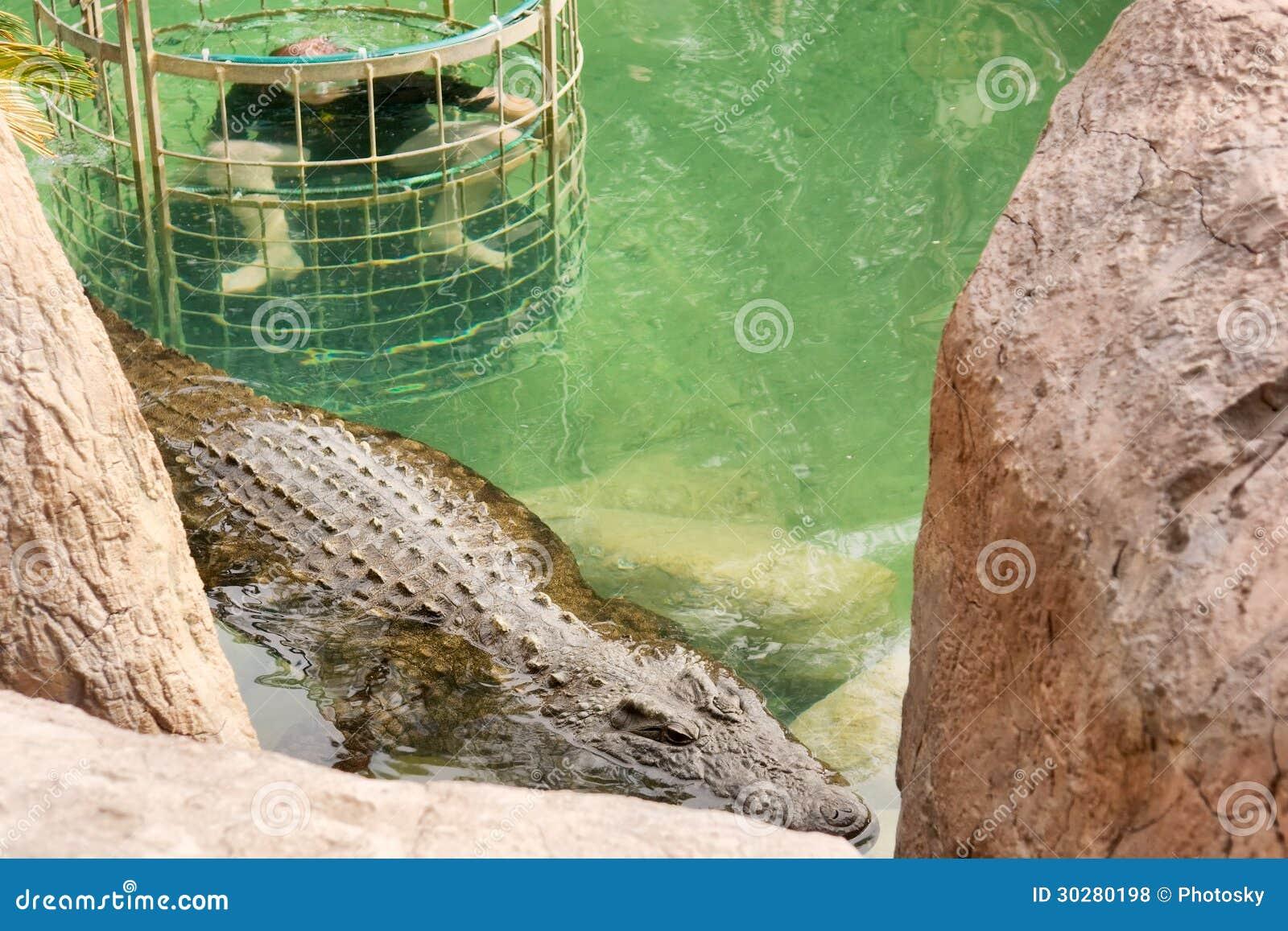 鳄鱼笼子潜水